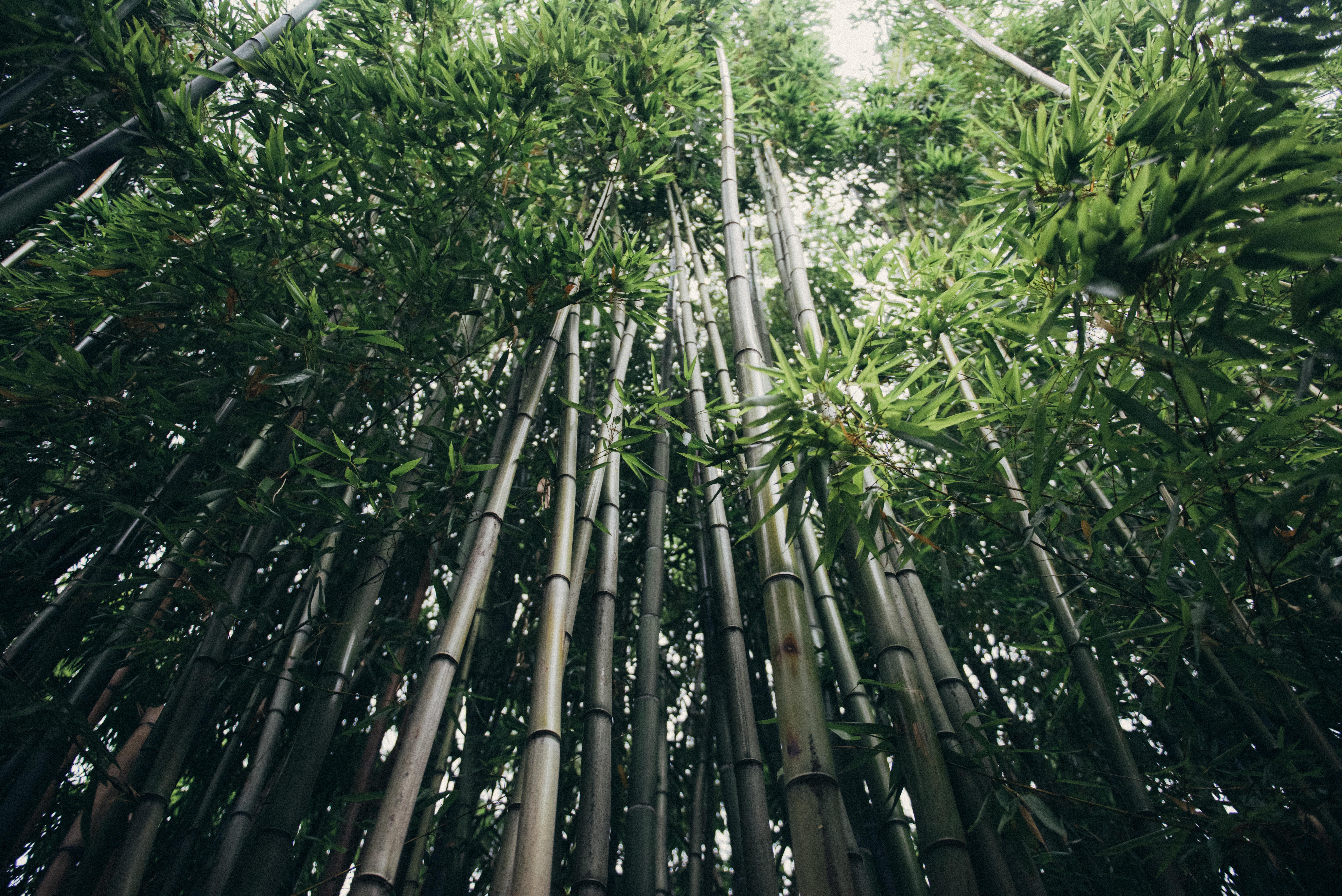 Kostenlose Foto Baum Wald Ast Blume Dschungel Botanik Garten