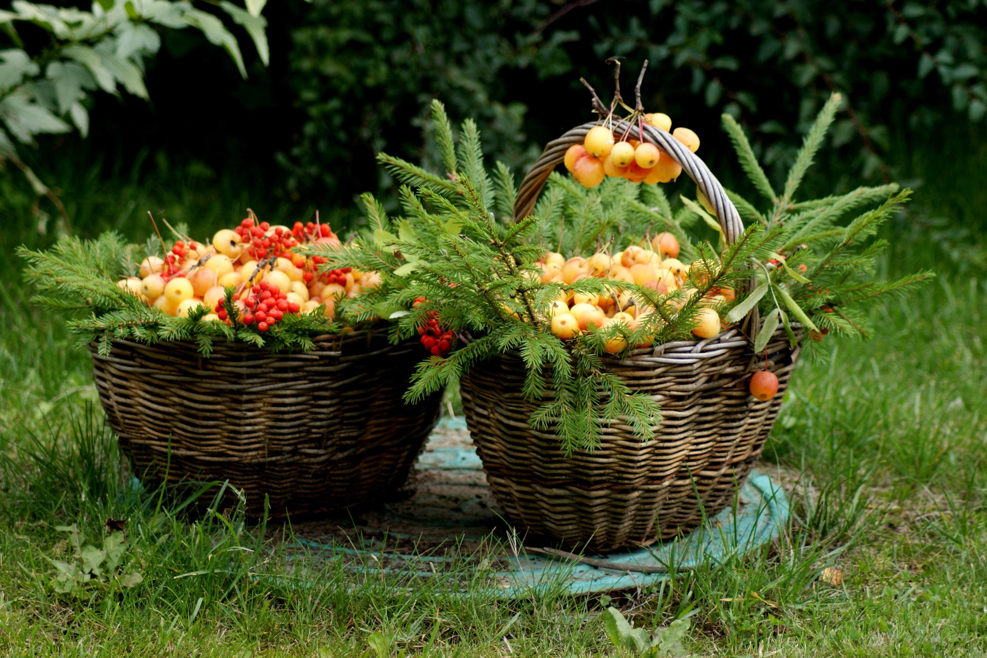 вы, корзина с ягодами и цветами фото удобное время перезвоним