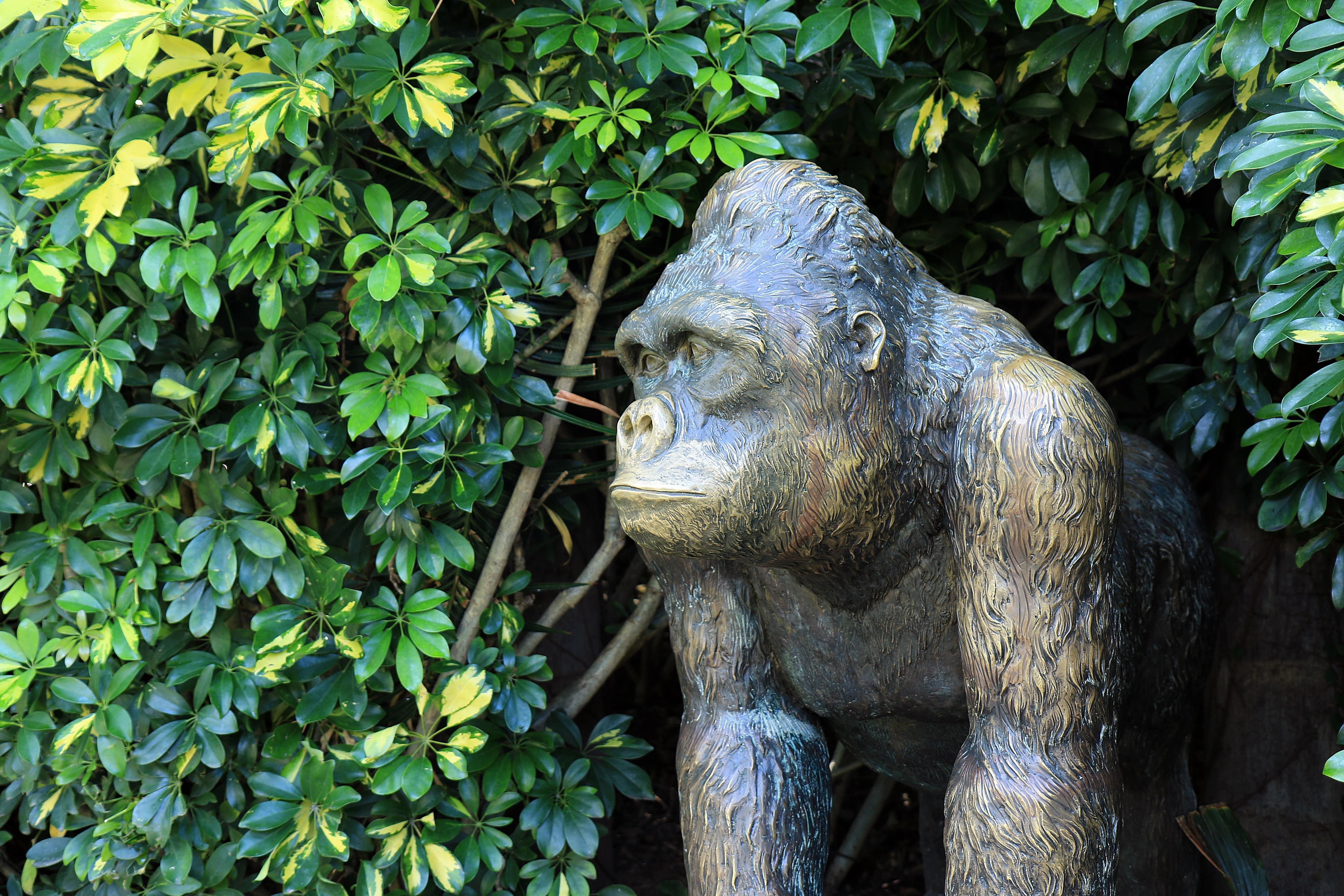 Памятники животным и растениям памятники во владимире на могилу йошкар