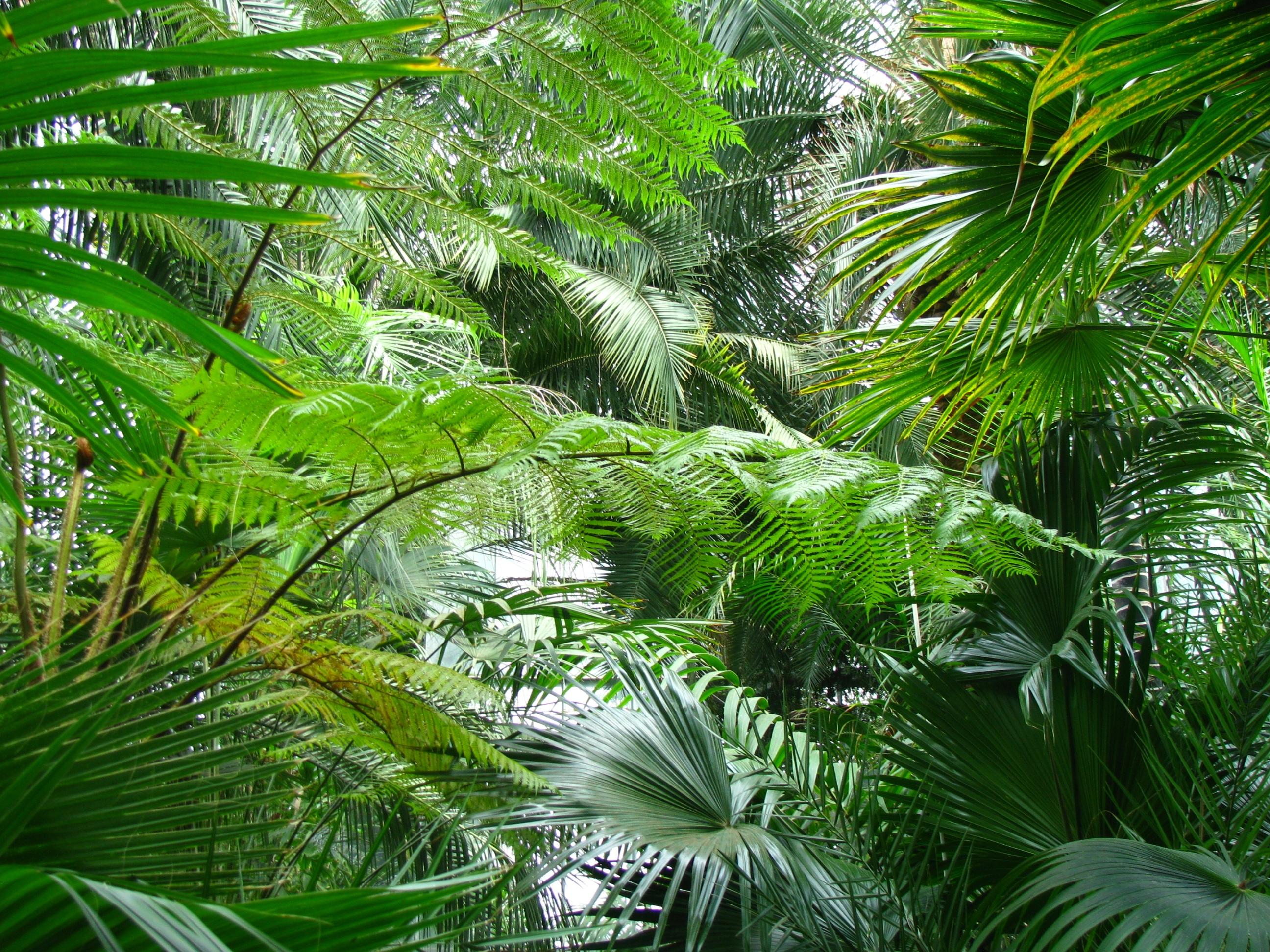 Fotos gratis rbol rama planta hoja flor verde for Aspiradora de hojas de jardin