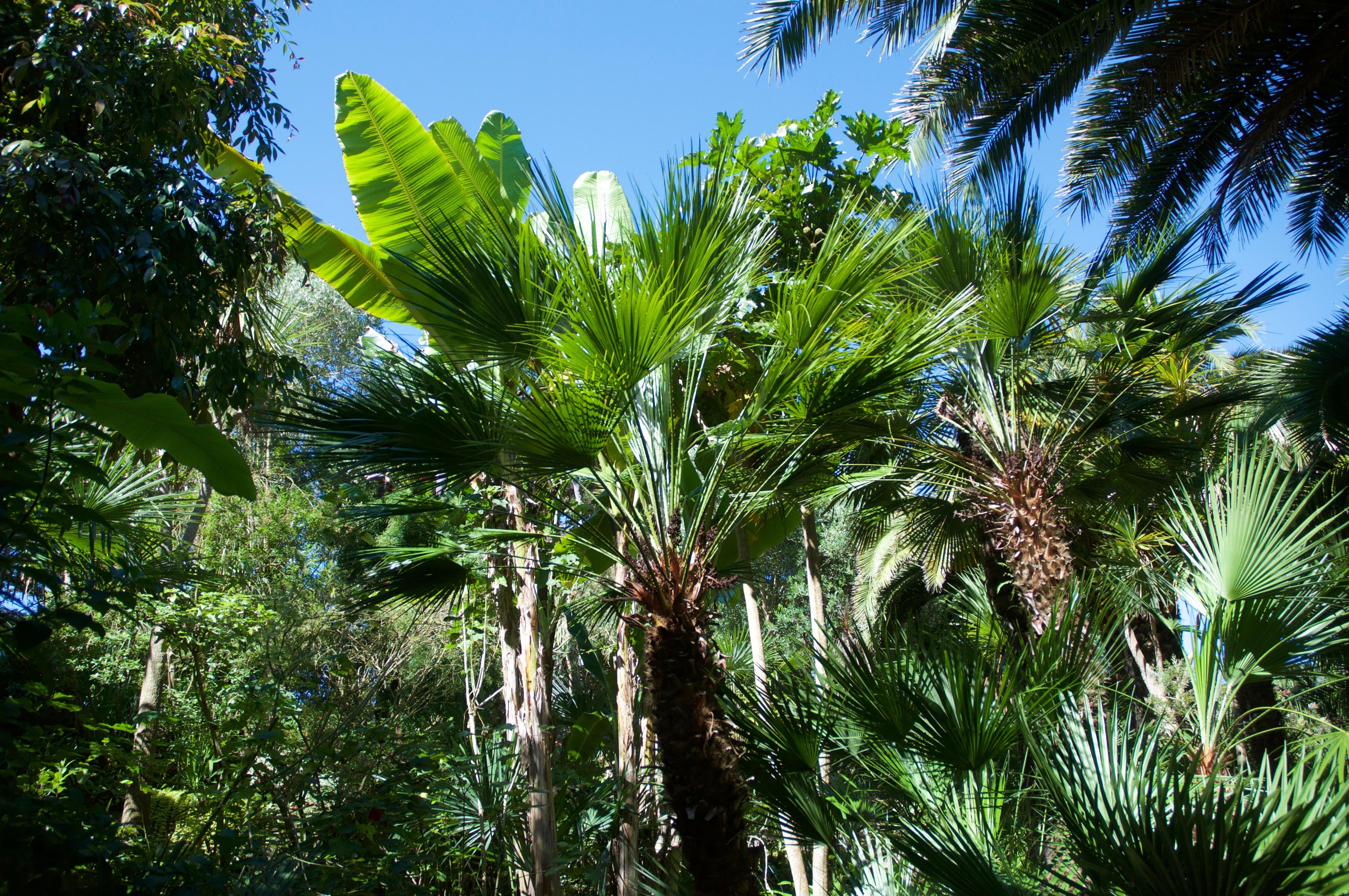 Картинки растения пальмы