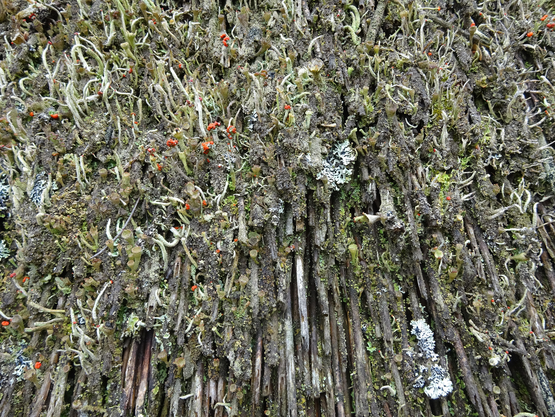 Gratis afbeeldingen : boom bos tak fabriek blad bloem oud mos