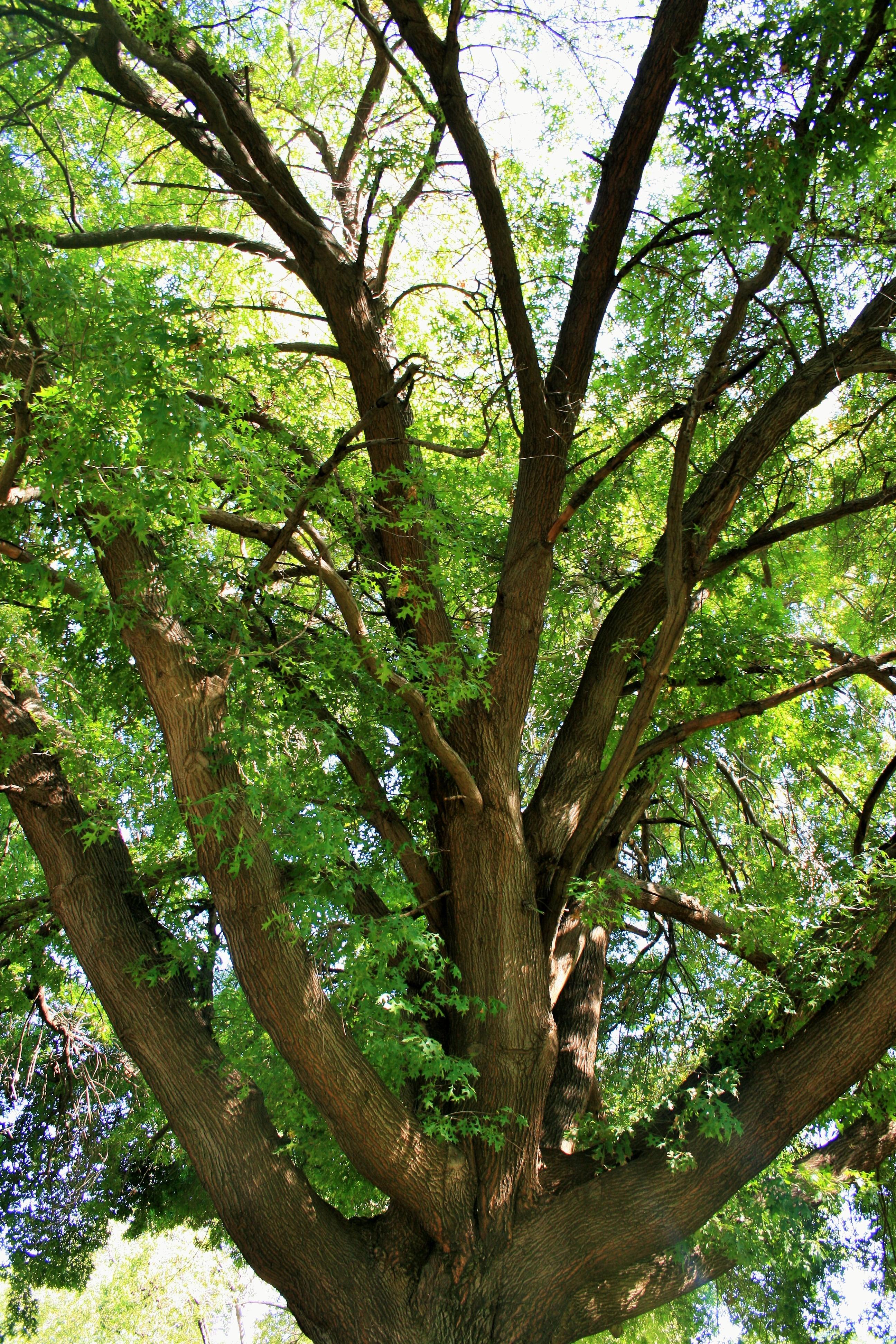 Buy oak tree trunk food ideas for Purchase trees