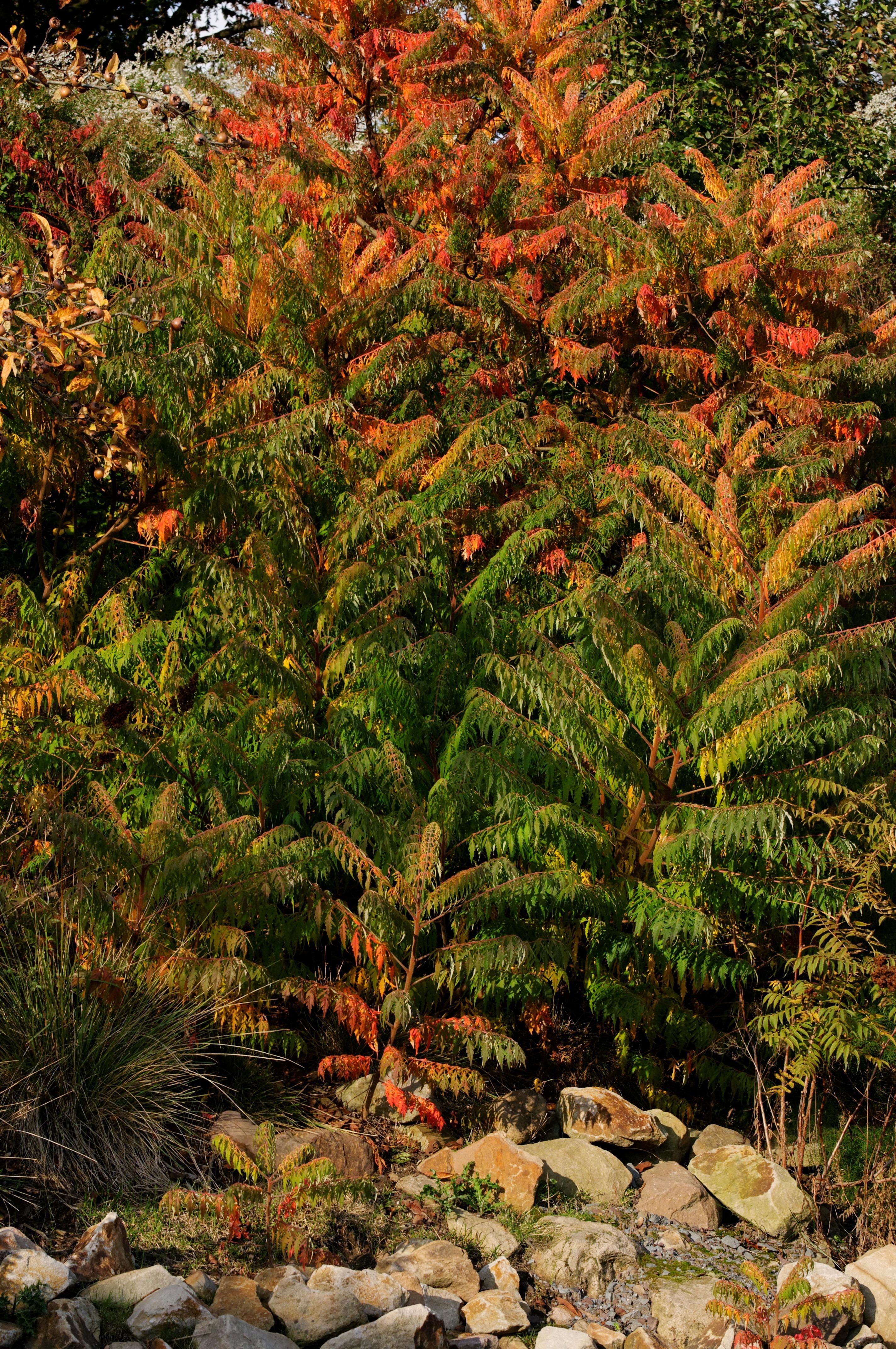 Fotos gratis rbol bosque rama planta naranja verde for Arbol rojo jardin