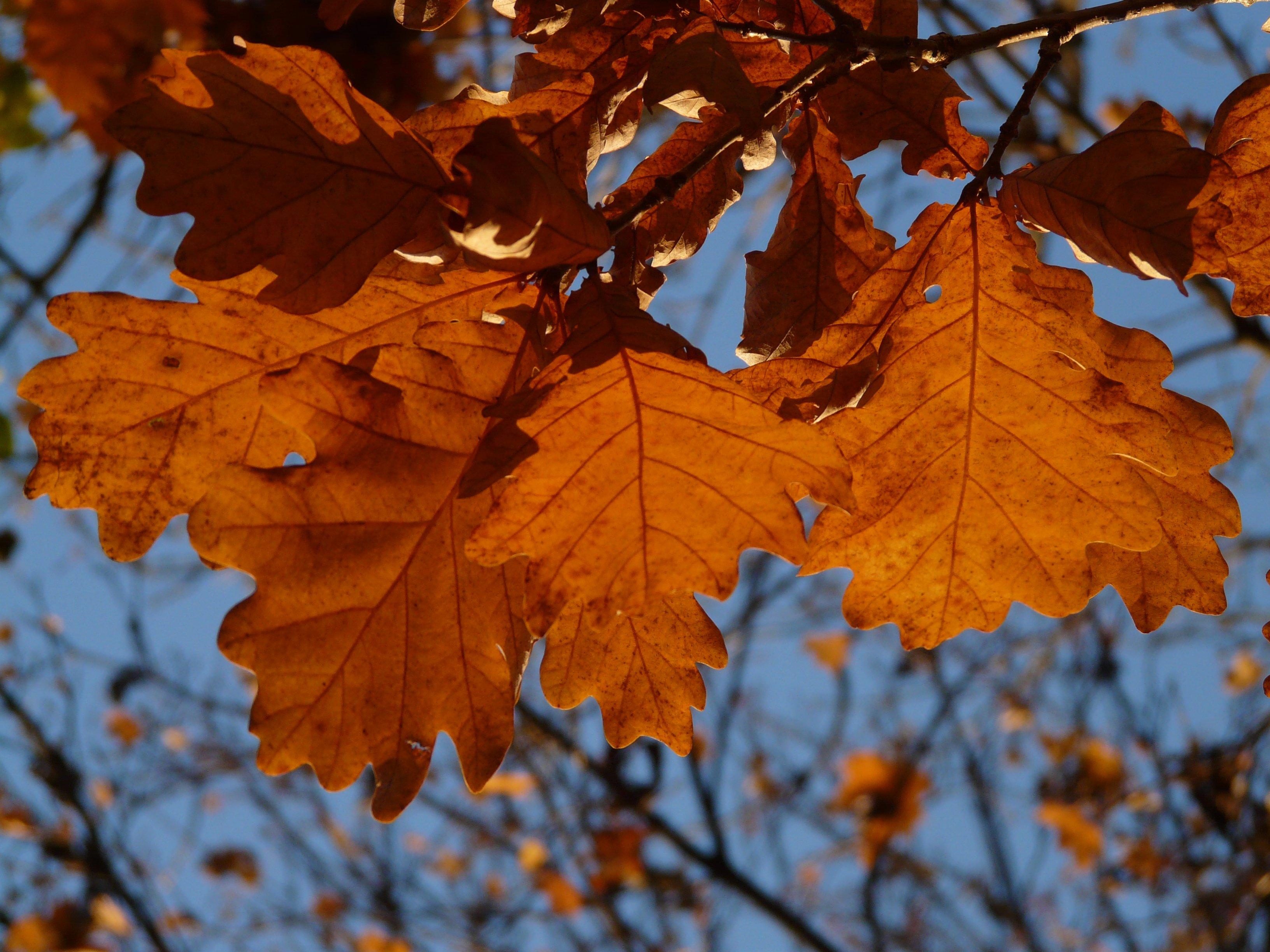 фото осенних листьев деревьев с названиями ремонт