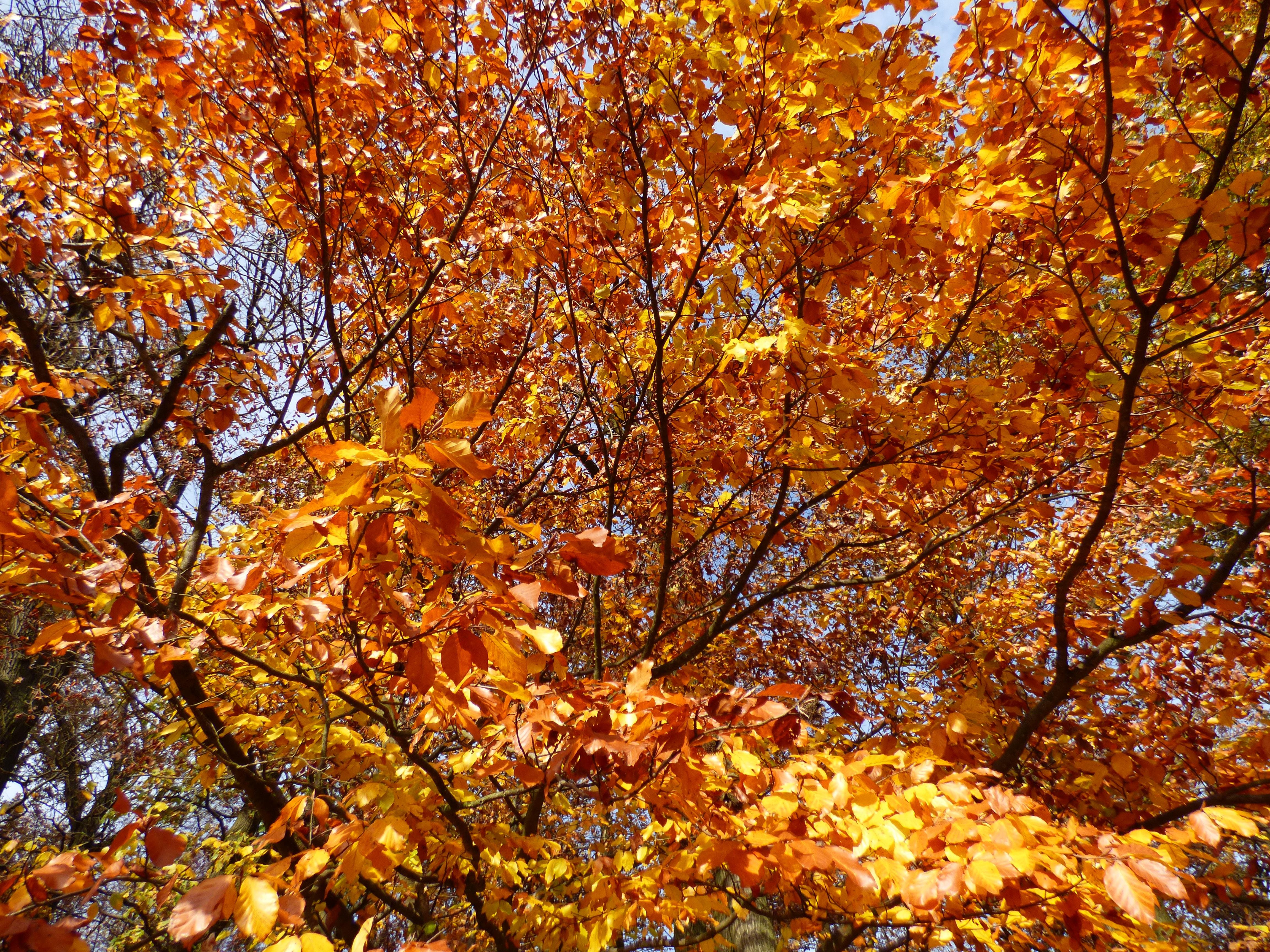 Fotoğraf Ağaç Orman şube Güneş ışığı Yaprak Sarı Sezon