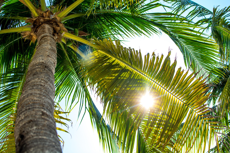 они являются смотреть фото пальм тропических замечательное своими улетными