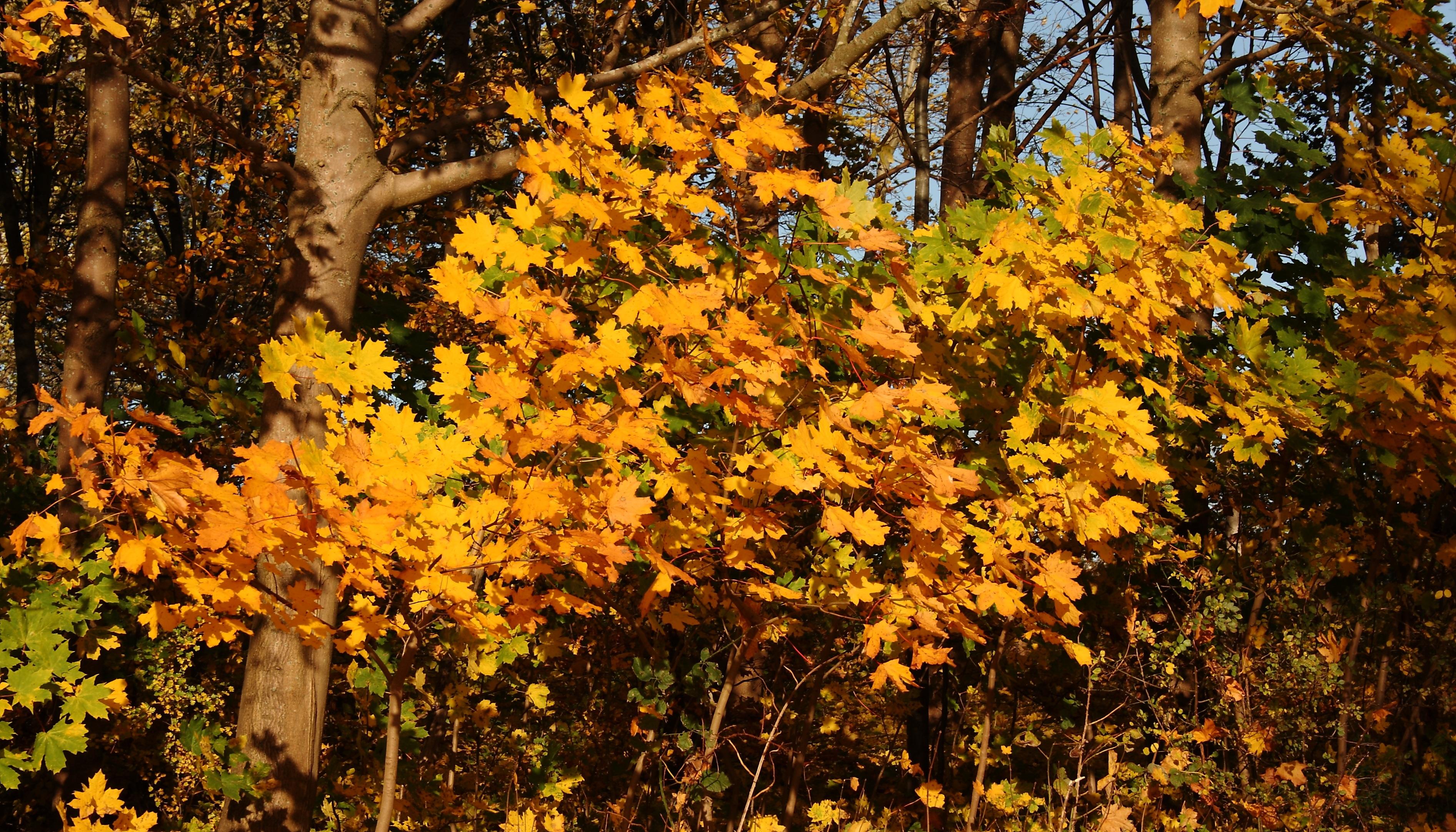 Images gratuites arbre for t branche lumi re du - Arbres a feuilles caduques ...