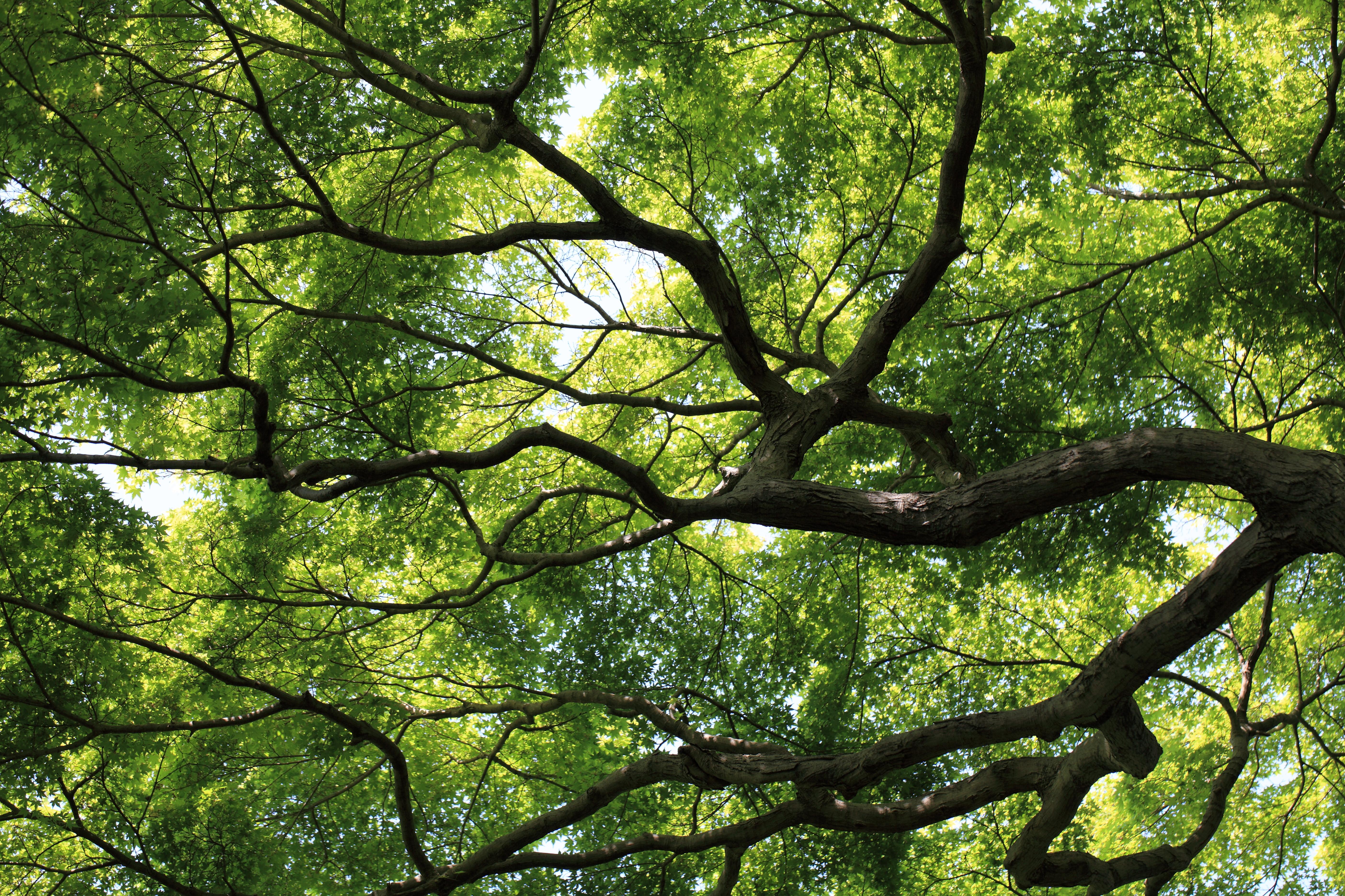лежащее дерево картинки вот незадача убийстве