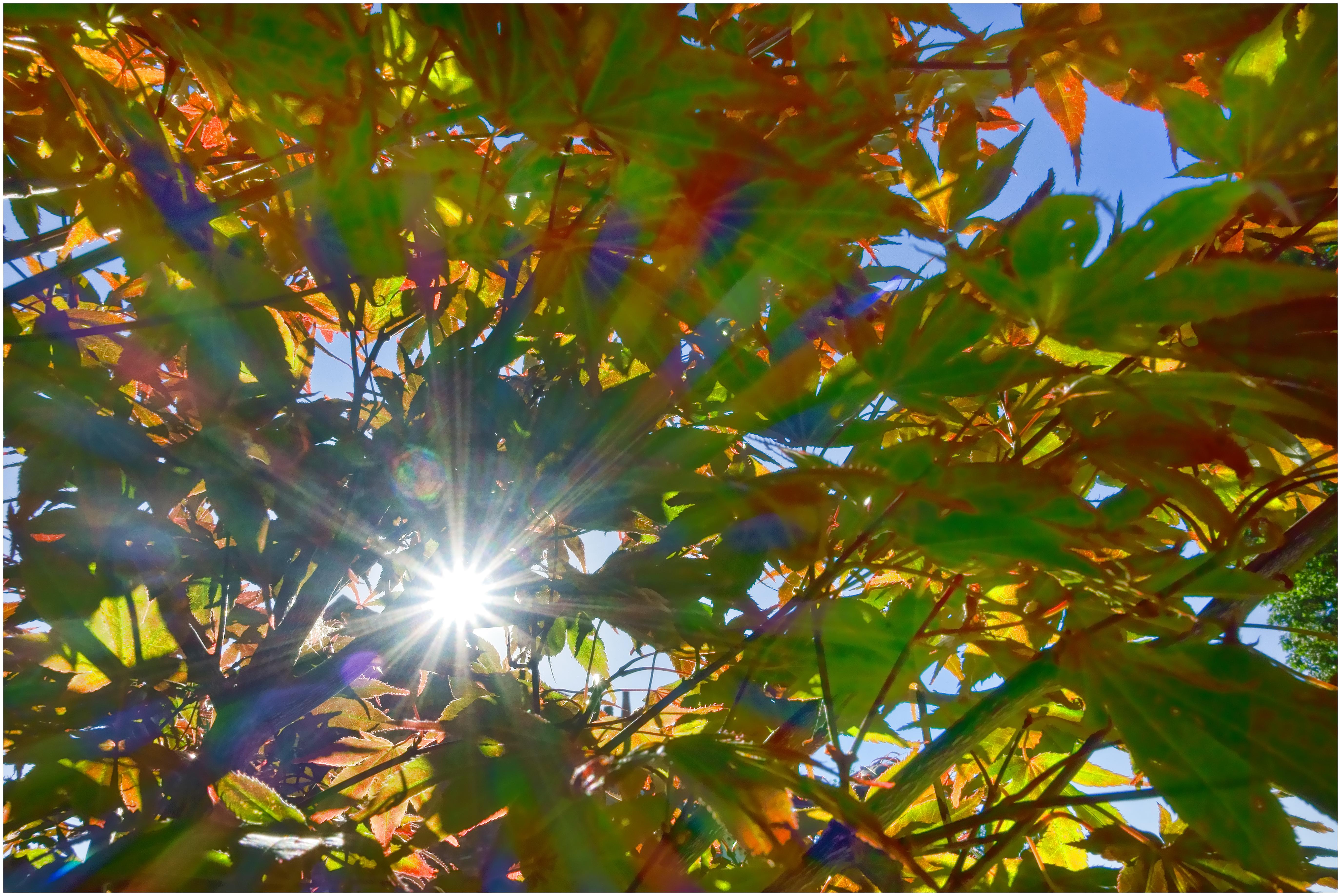 Fotos gratis bosque rama amanecer blanco luz de sol for Arbol rojo jardin
