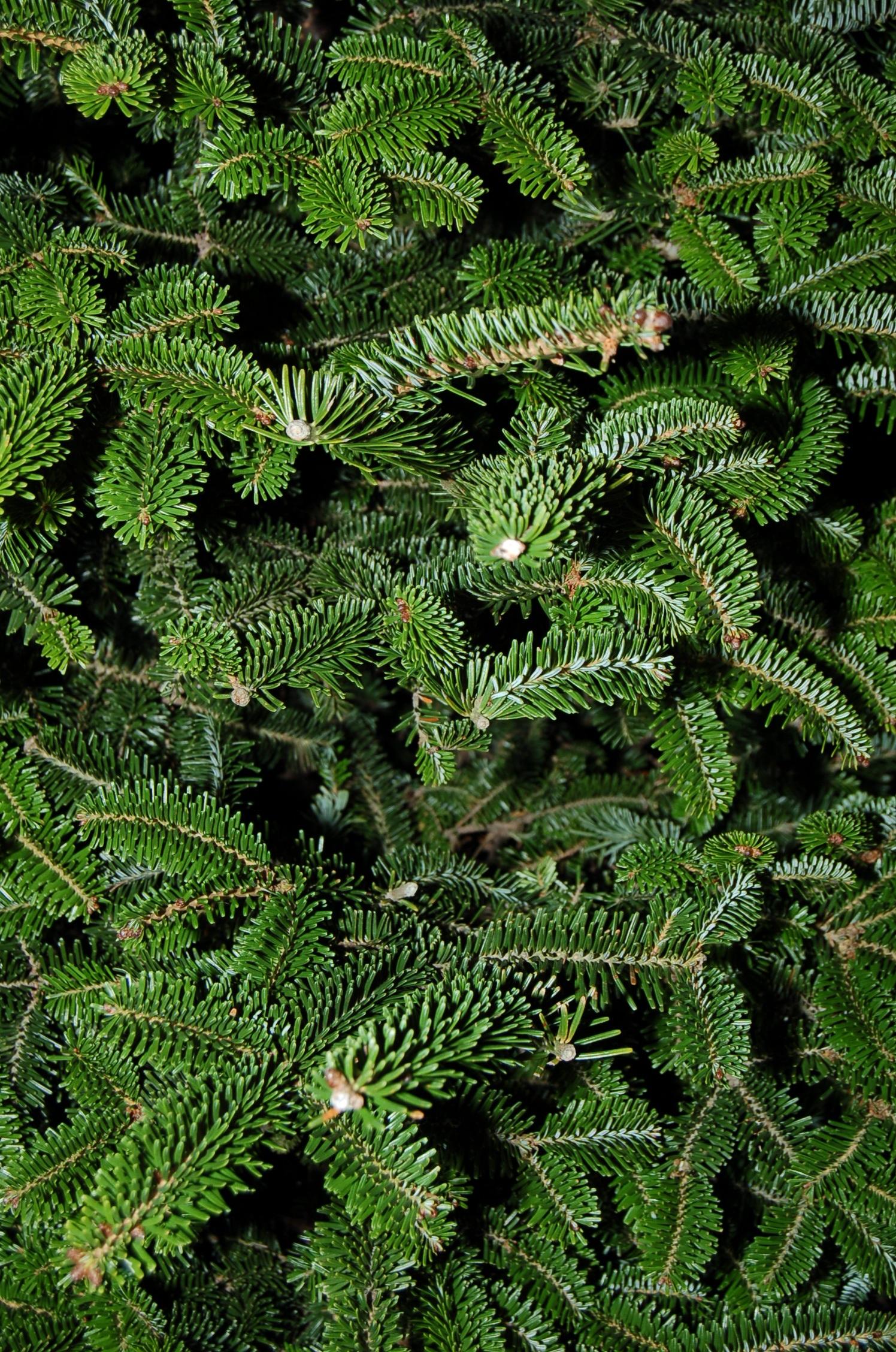 Images gratuites arbre for t branche plante texture for Arbres a feuilles persistantes