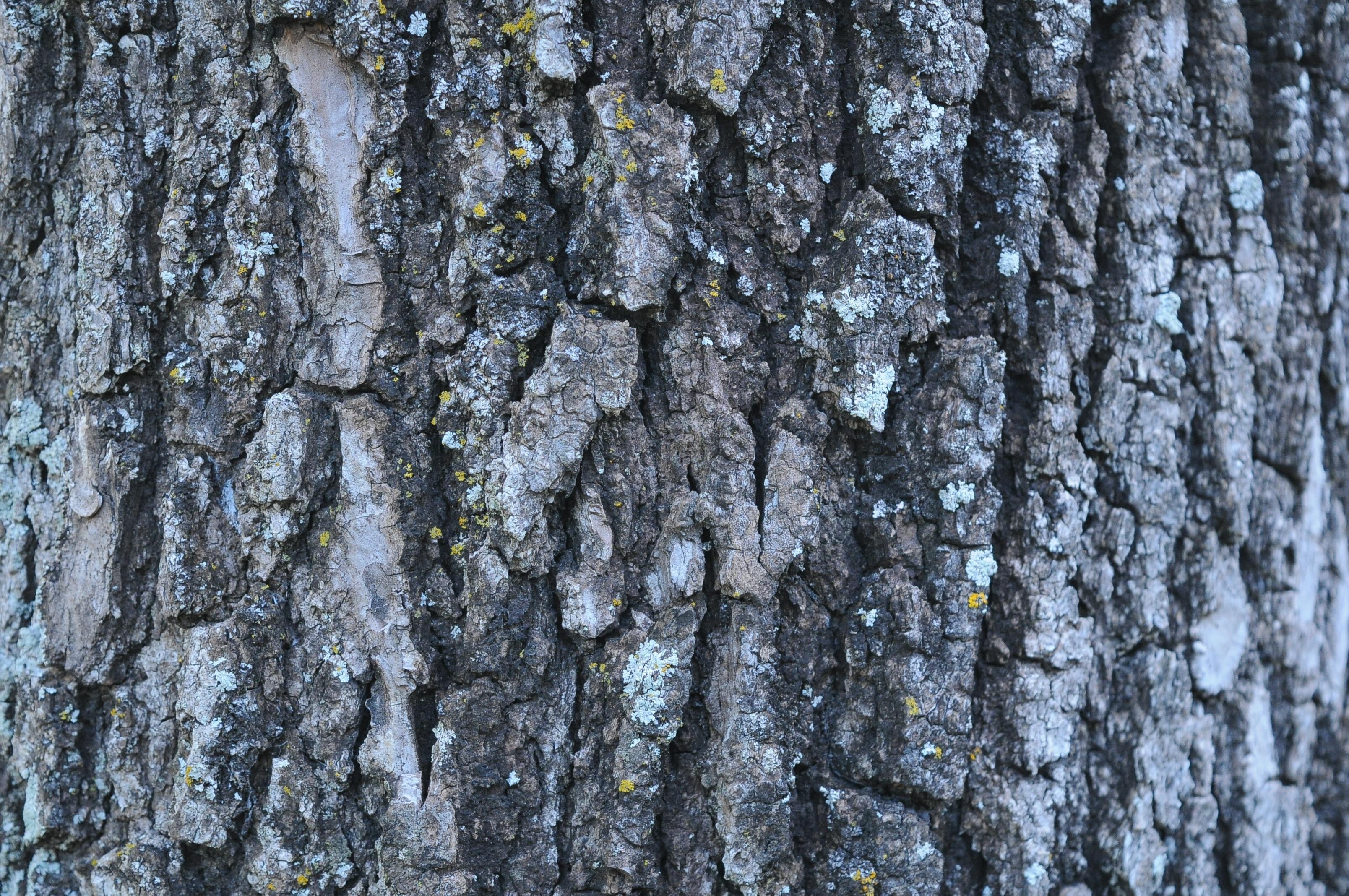 Fotos gratis árbol bosque rama madera textura hoja