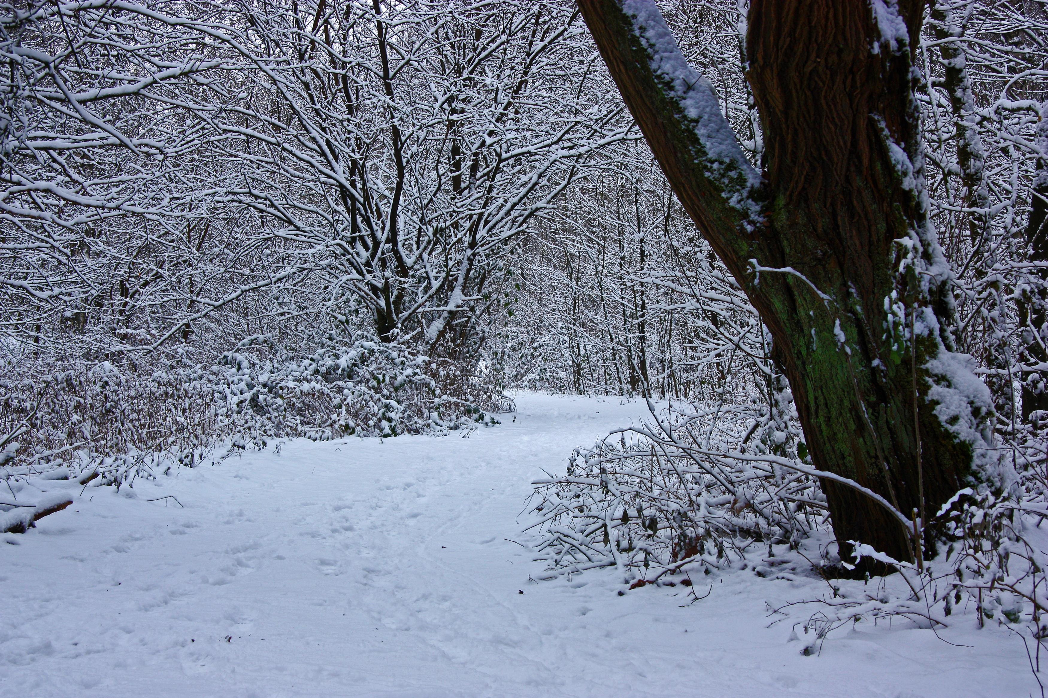 картинка деревья и кусты зимой островные