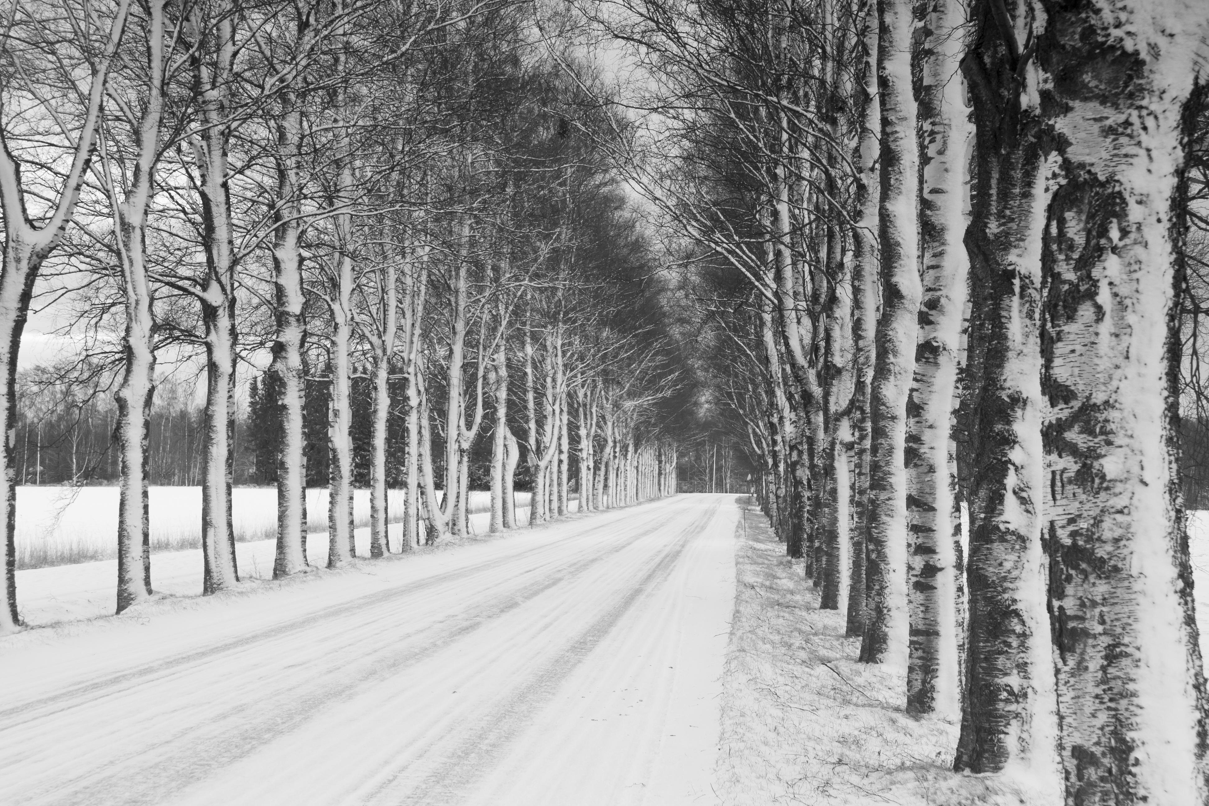 Fotos gratis : árbol, bosque, rama, nieve, invierno, en blanco y ...
