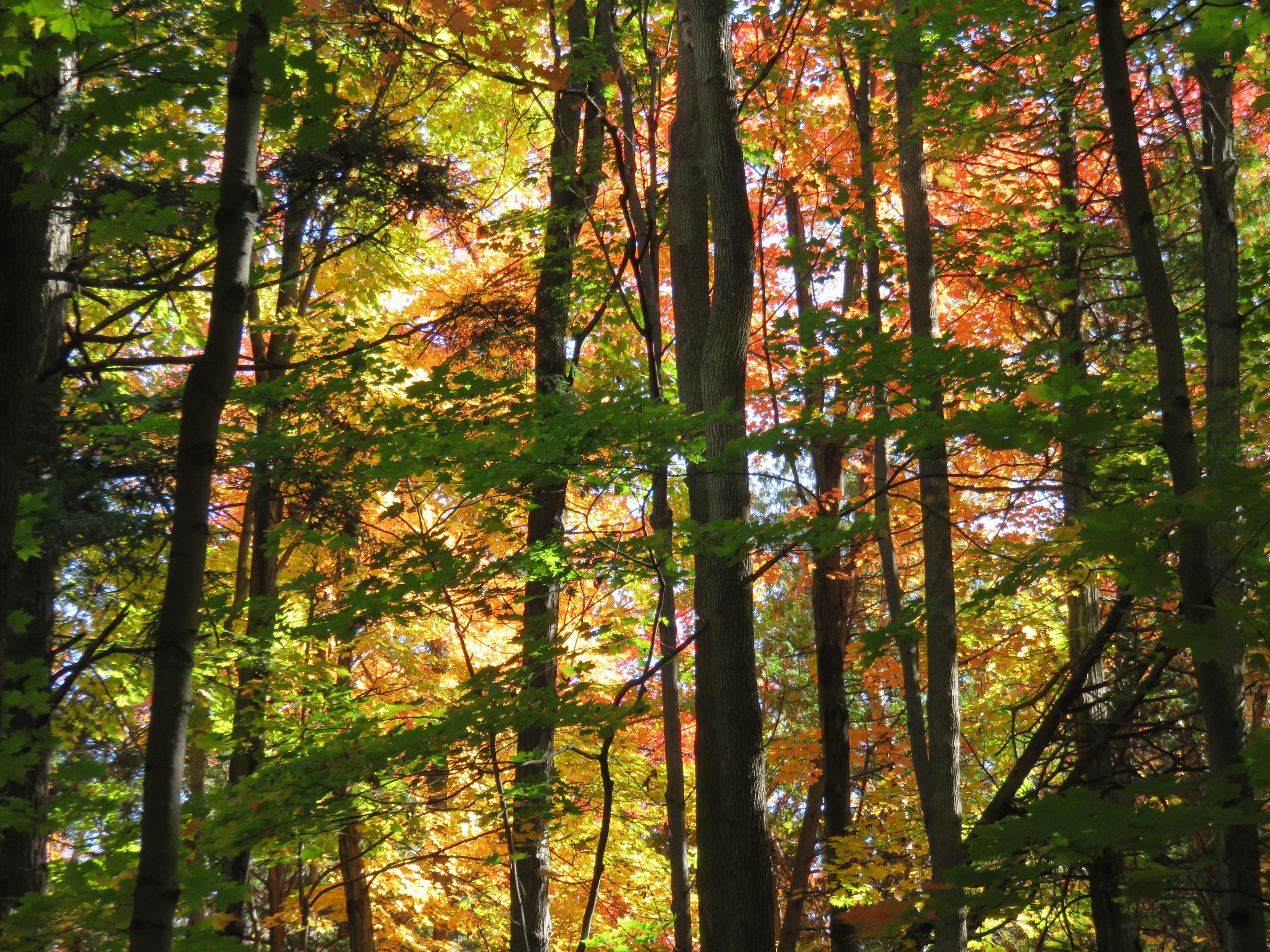 Kostenlose Foto Baum Wald Ast Sonnenlicht Blatt Fallen