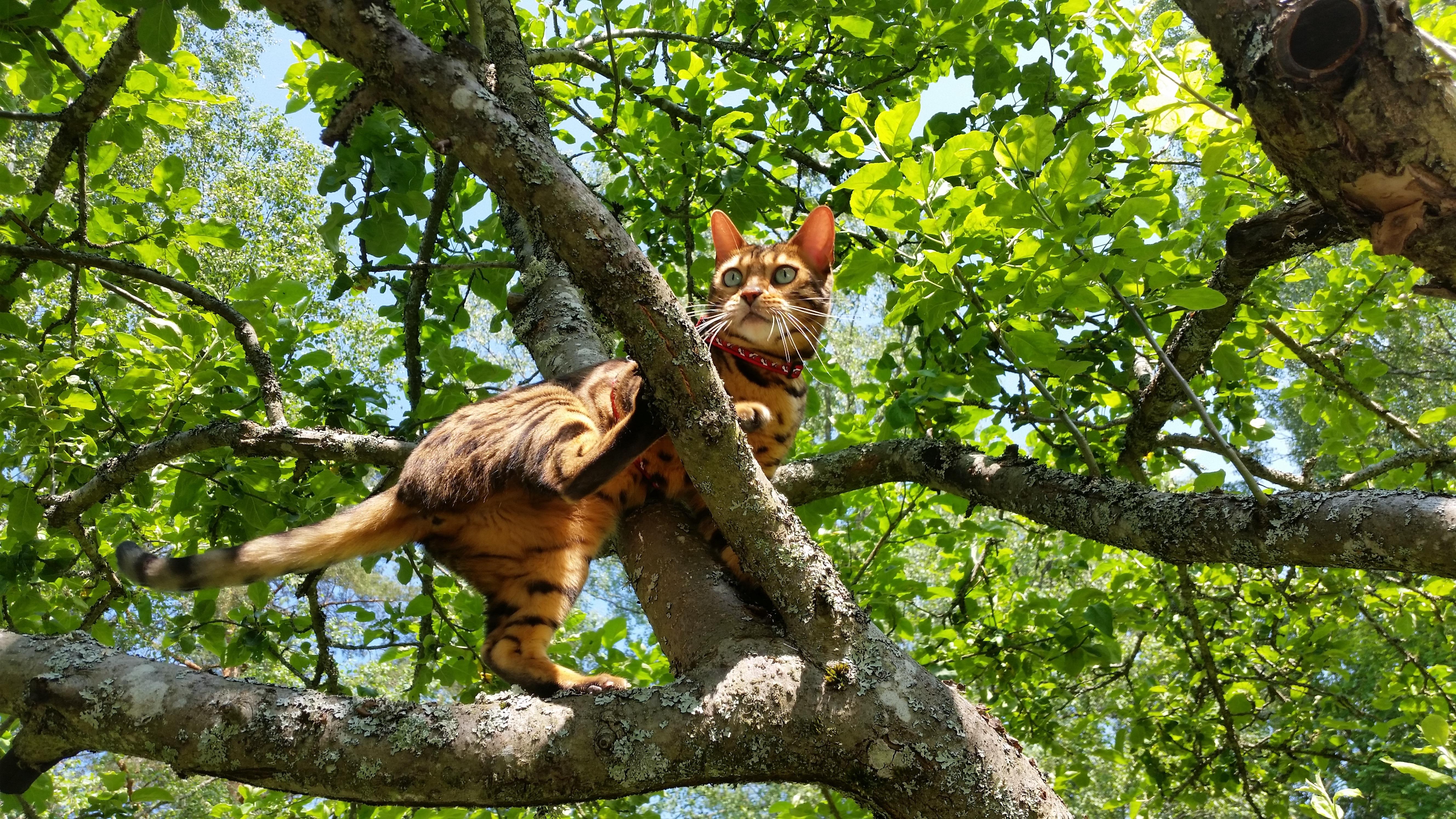 Bien-aimé Images Gratuites : arbre, branche, faune, zoo, jungle, chat  RK44