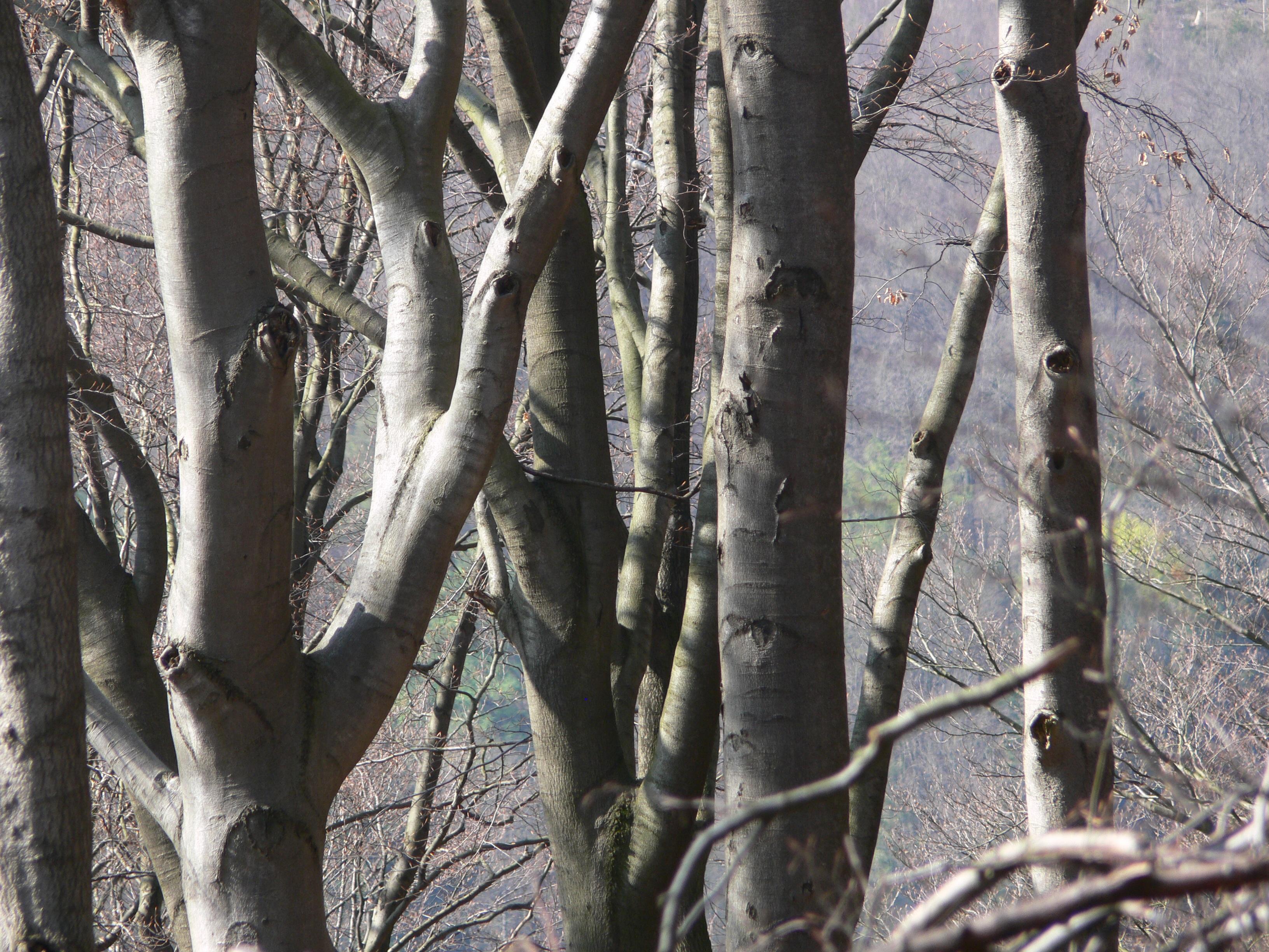 Fotos gratis : árbol, rama, invierno, madera, el maletero, ladrar ...