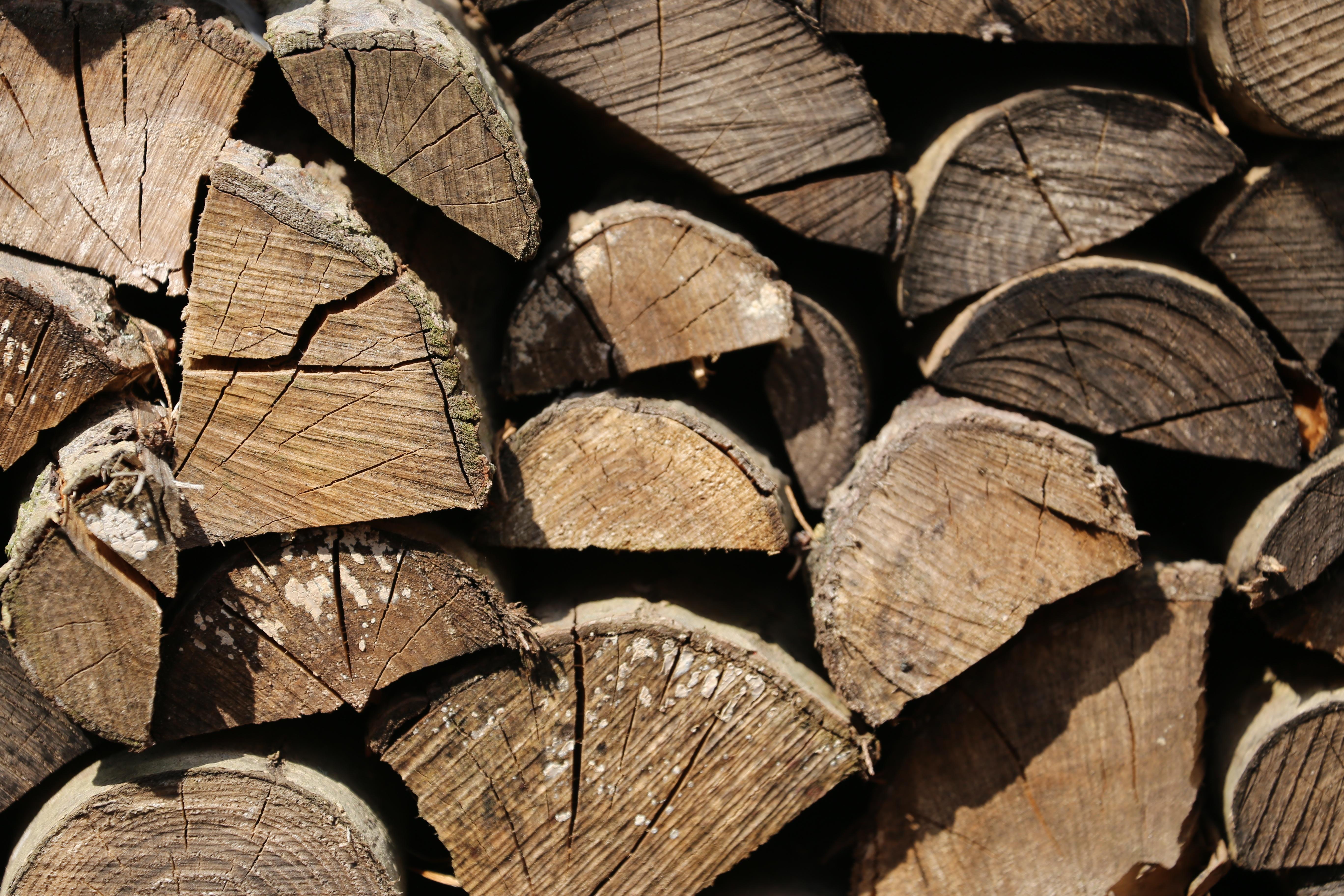 Kostenlose Foto Baum Wald Ast Warm Blatt Kofferraum