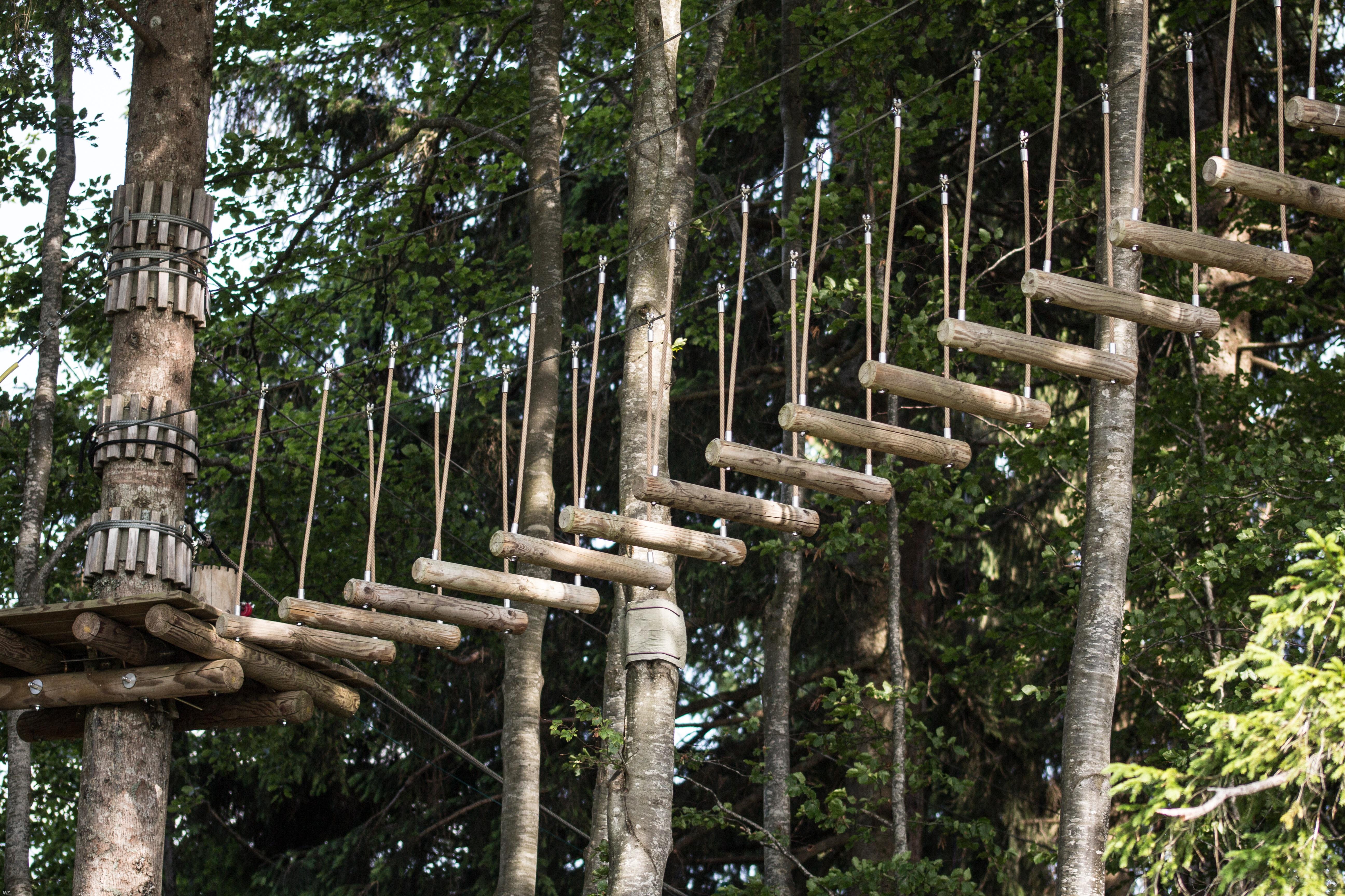 Kostenlose foto : Baum, Wald, Zaun, Sommer-, Dschungel ...