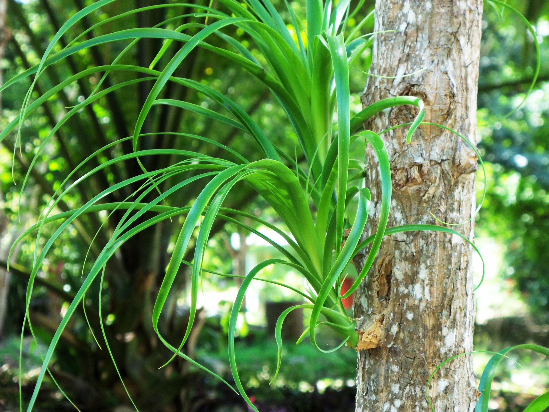 plante exotique mexique