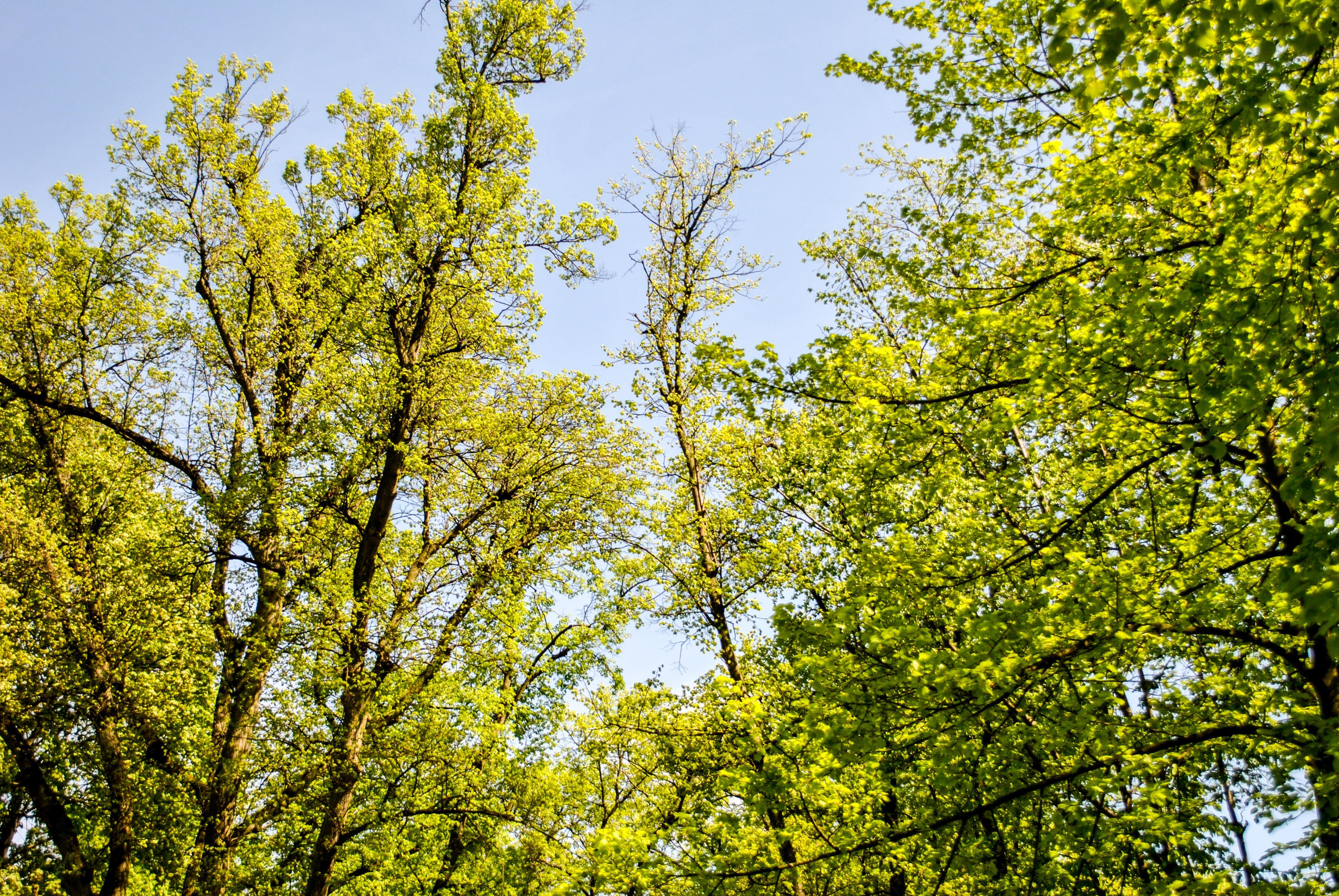 foto de Images Gratuites : arbre, herbe, branche, plante, ciel, lumière du ...