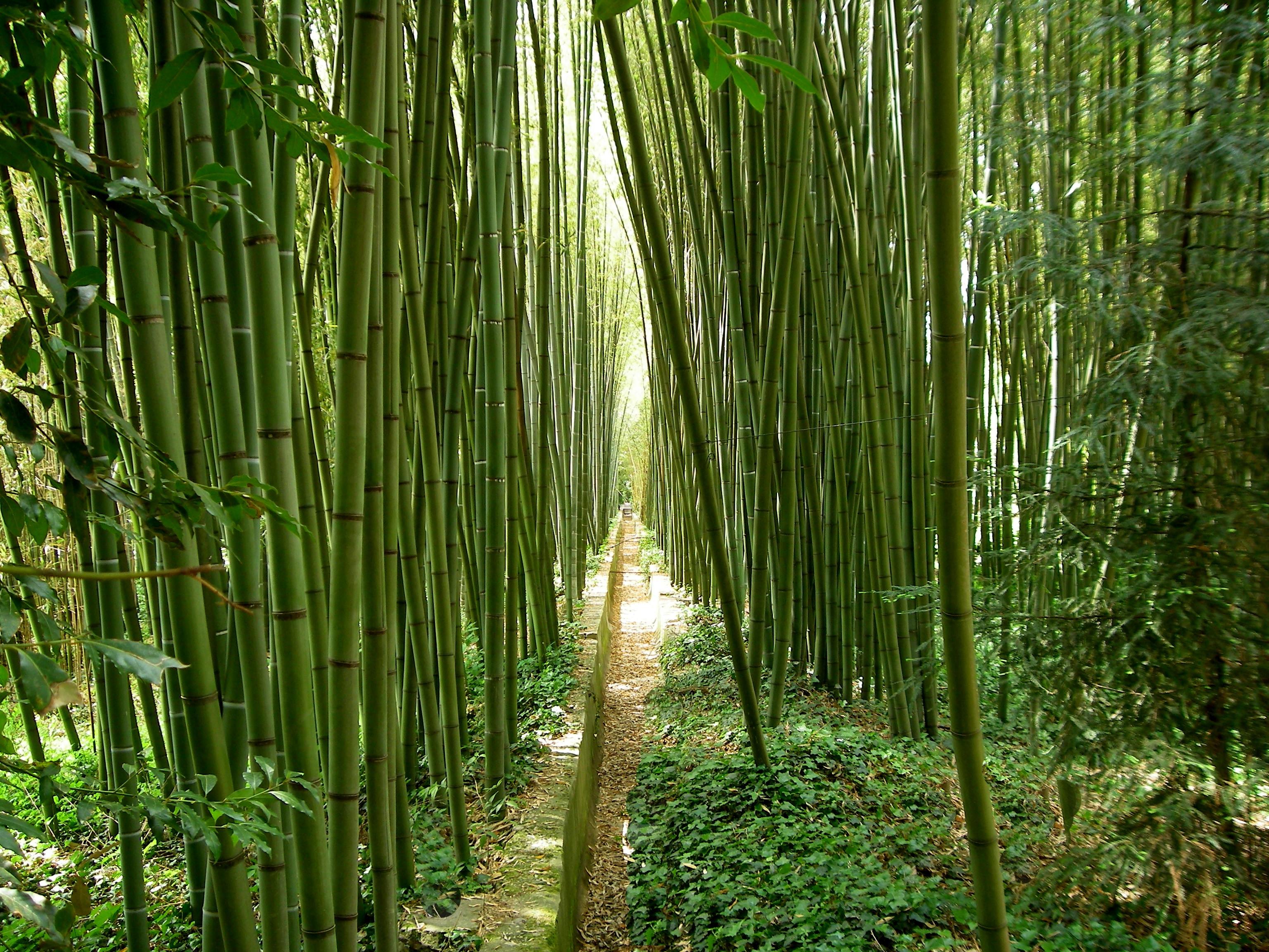 Gratis billeder tr skov gr s afdeling sollys blad - Plante jungle ...