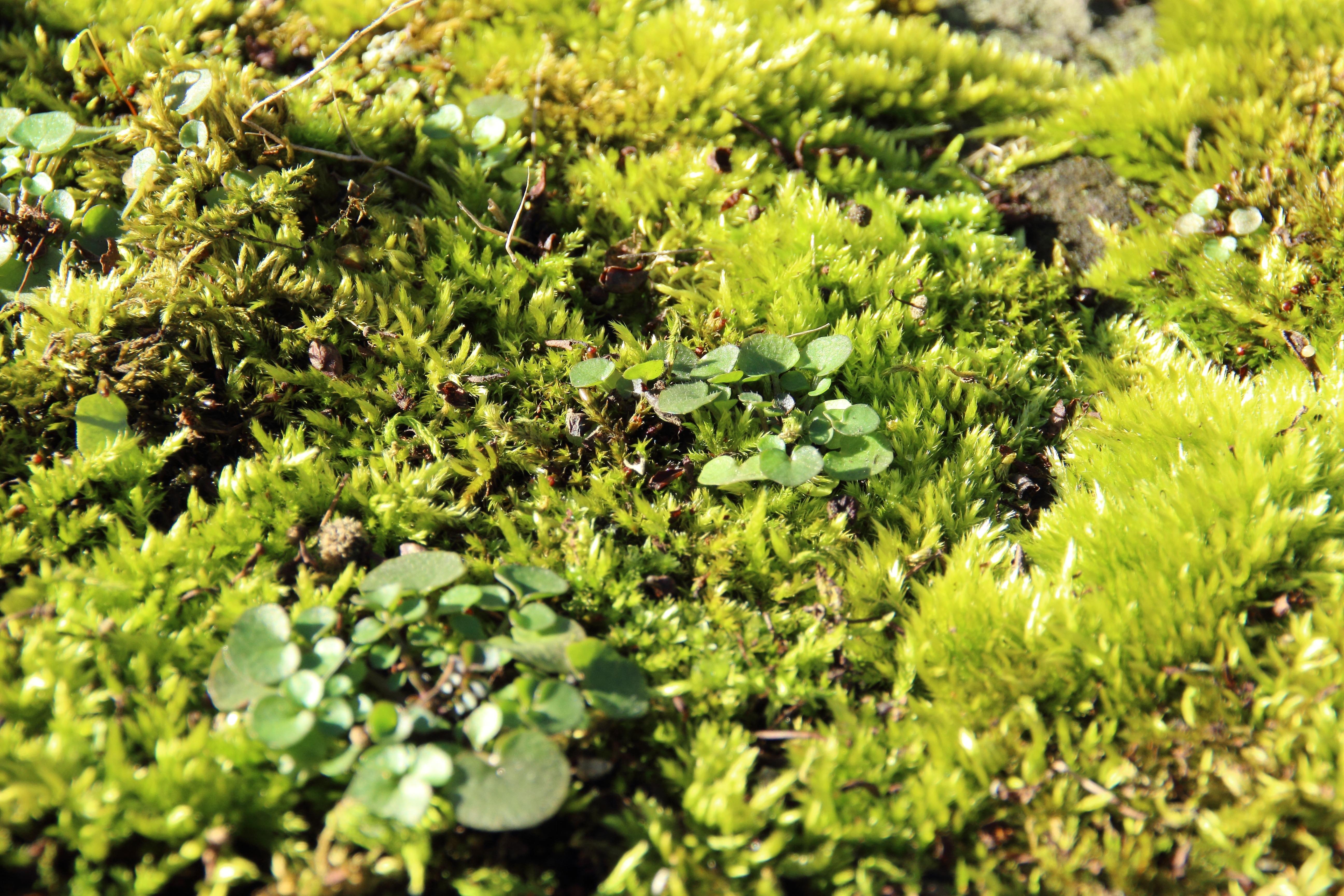 images gratuites arbre for t herbe pelouse feuille fleur mousse vert duveteux. Black Bedroom Furniture Sets. Home Design Ideas