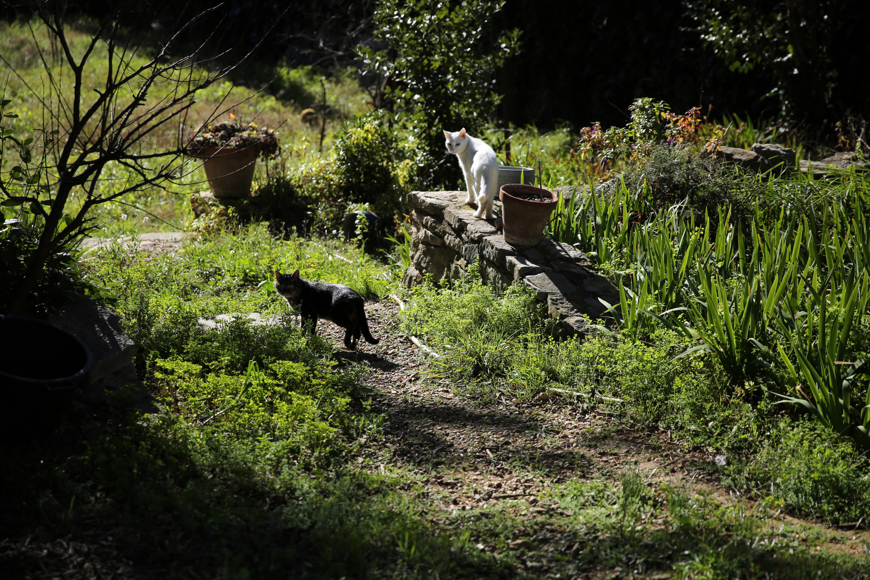 Kostenlose foto : Baum, Wald, Gras, Wildnis, Frankreich, Tierwelt ...