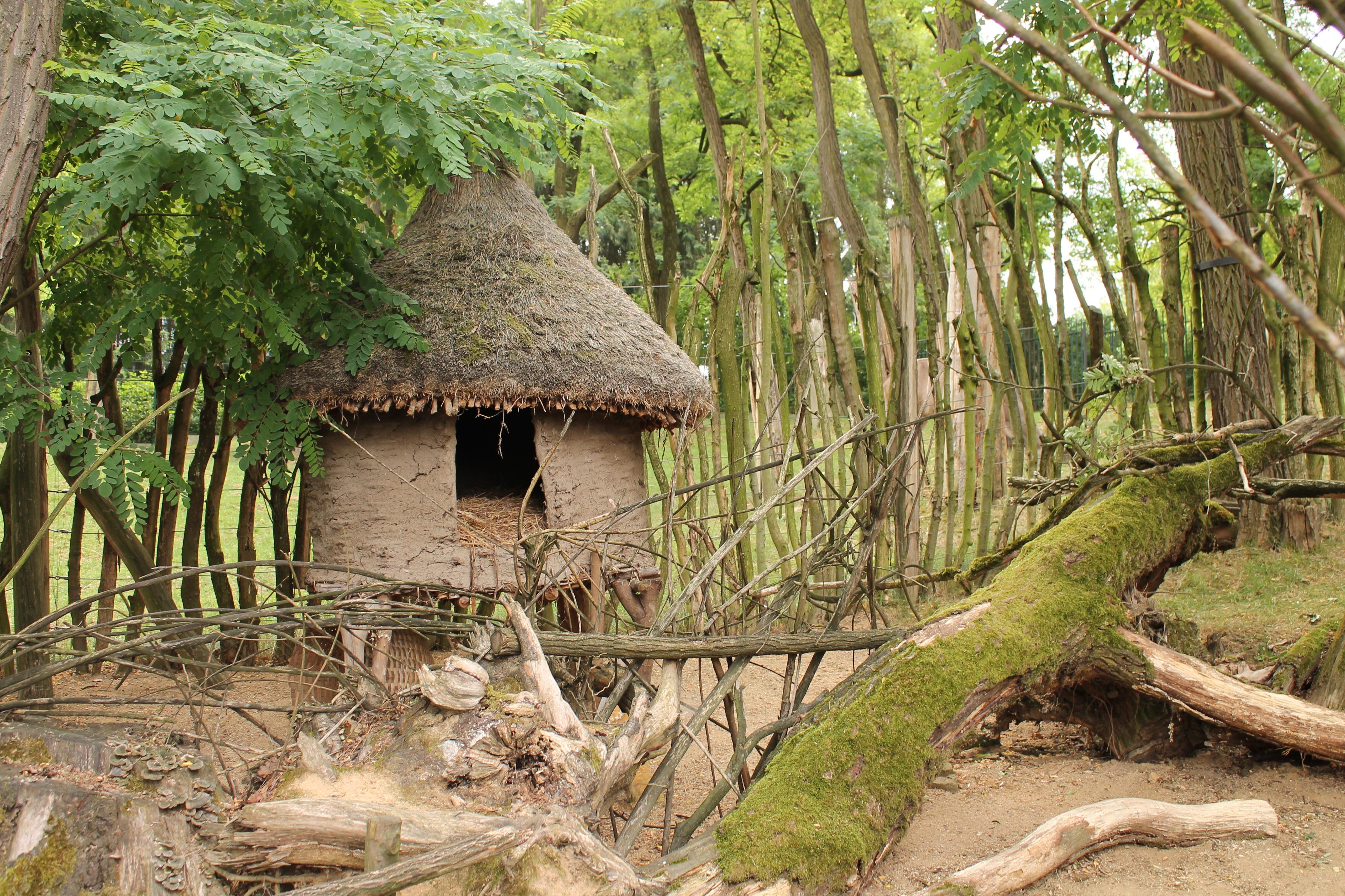 Gambar Pohon Pondok Margasatwa Rimba Afrika Ketegangan Hutan