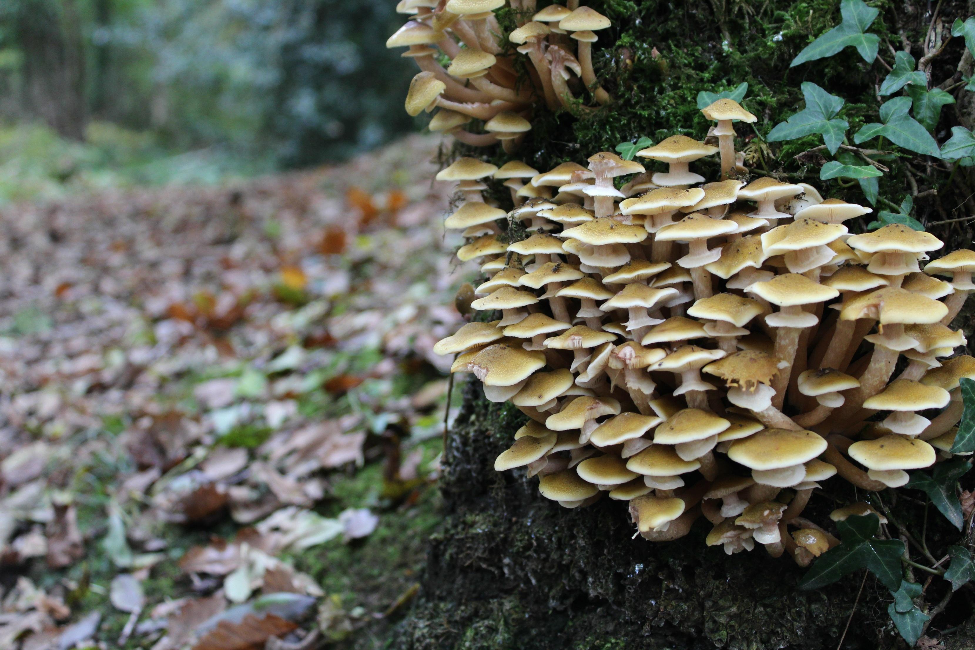paraziták kezelése gombákkal