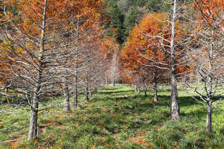 fotos gratis    u00e1rbol  bosque  monta u00f1a  flor  pino