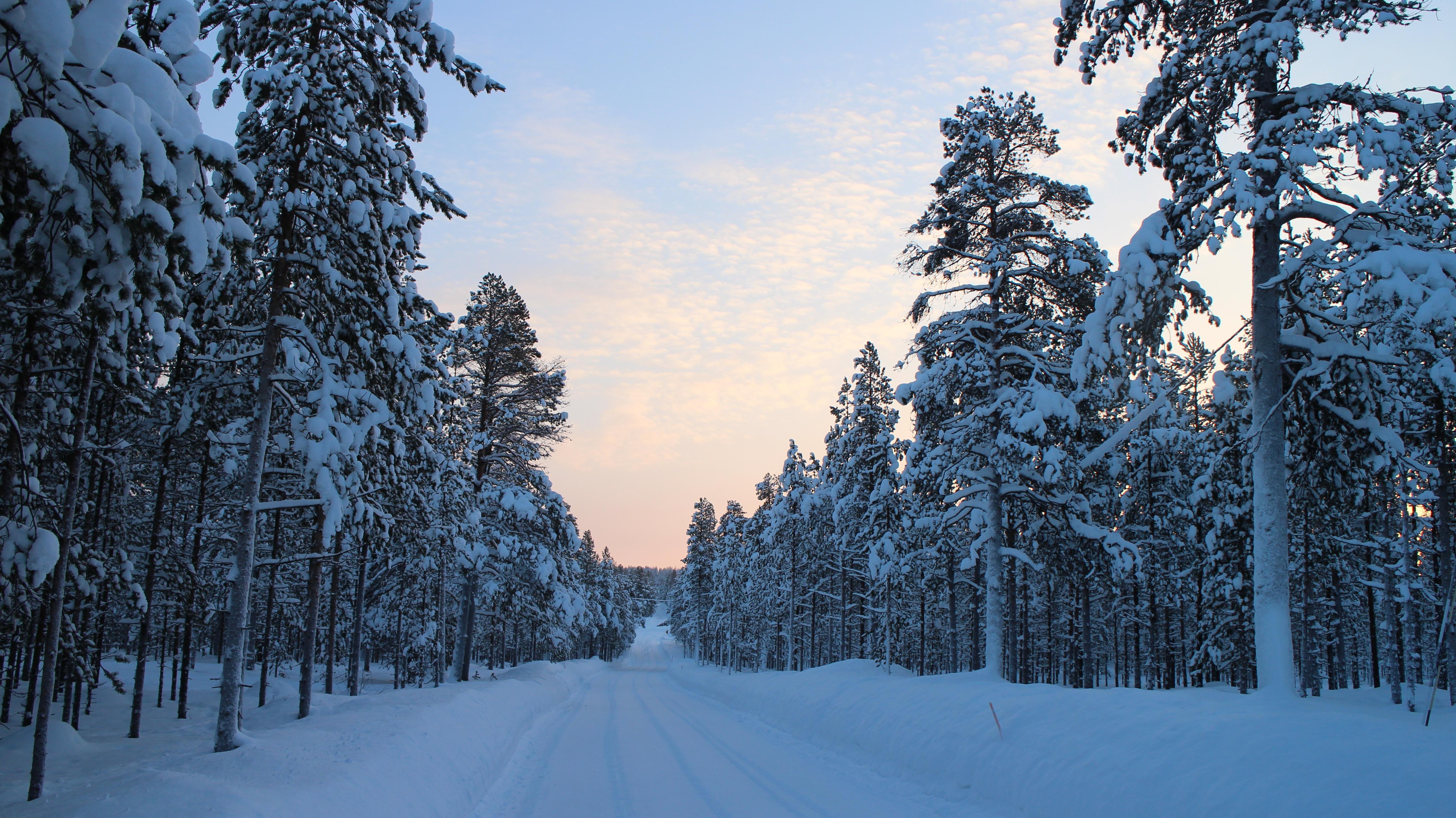 Lumi Laukut Suomi : Ilmaisia kuvia puu mets? vuori lumi kylm? talvi