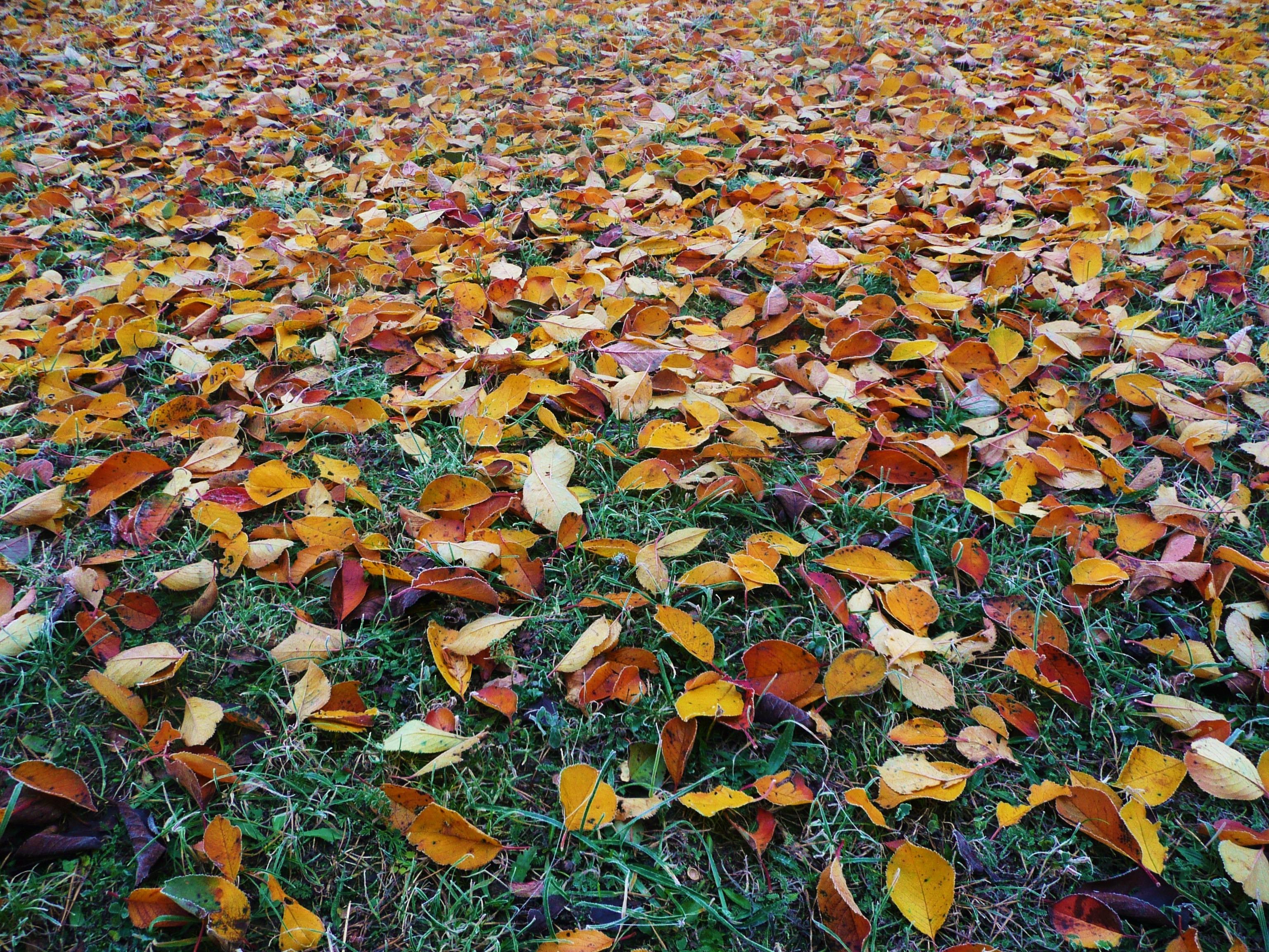 картинки земля покрытая осенними листьями получили