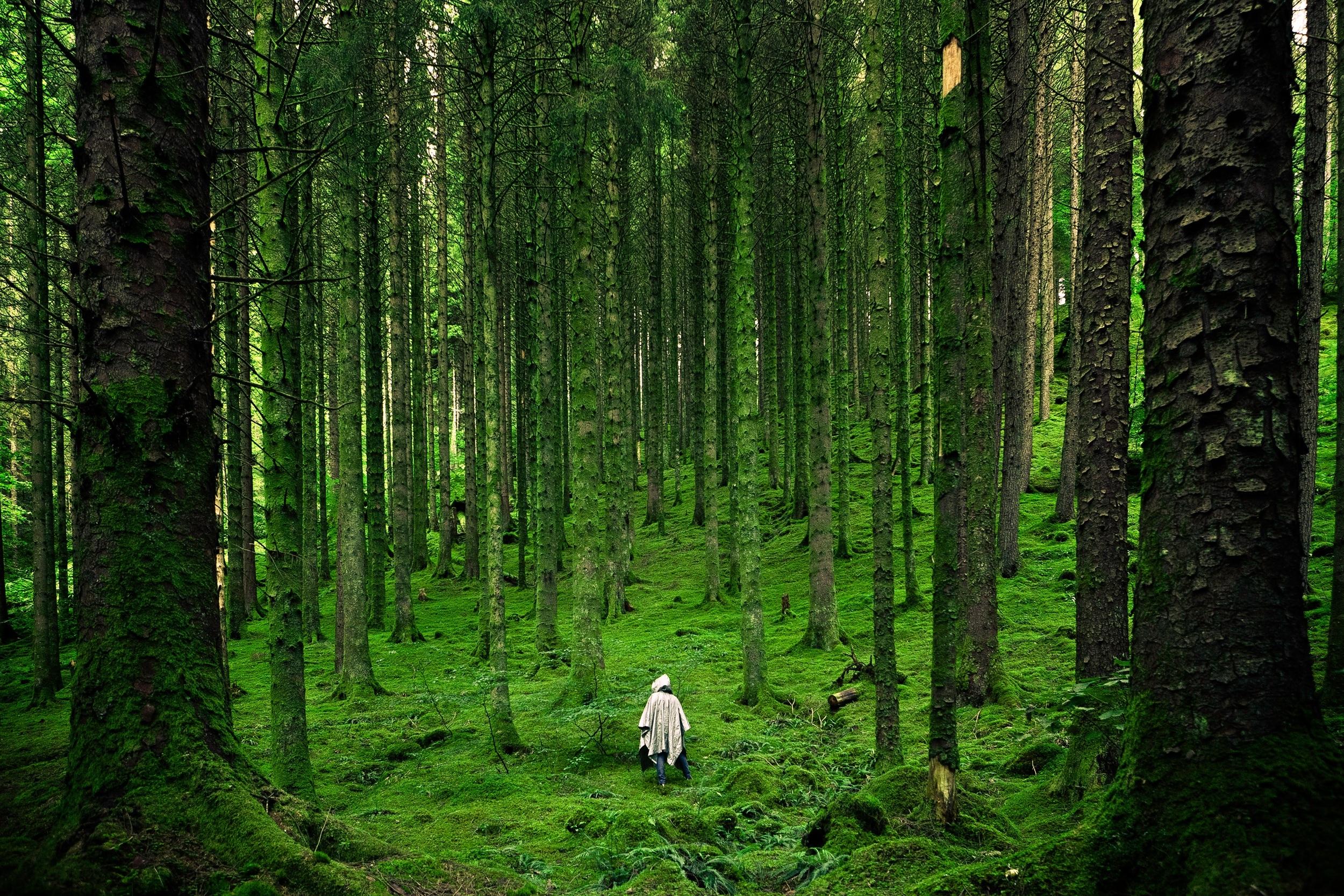 Картинка леса и человека