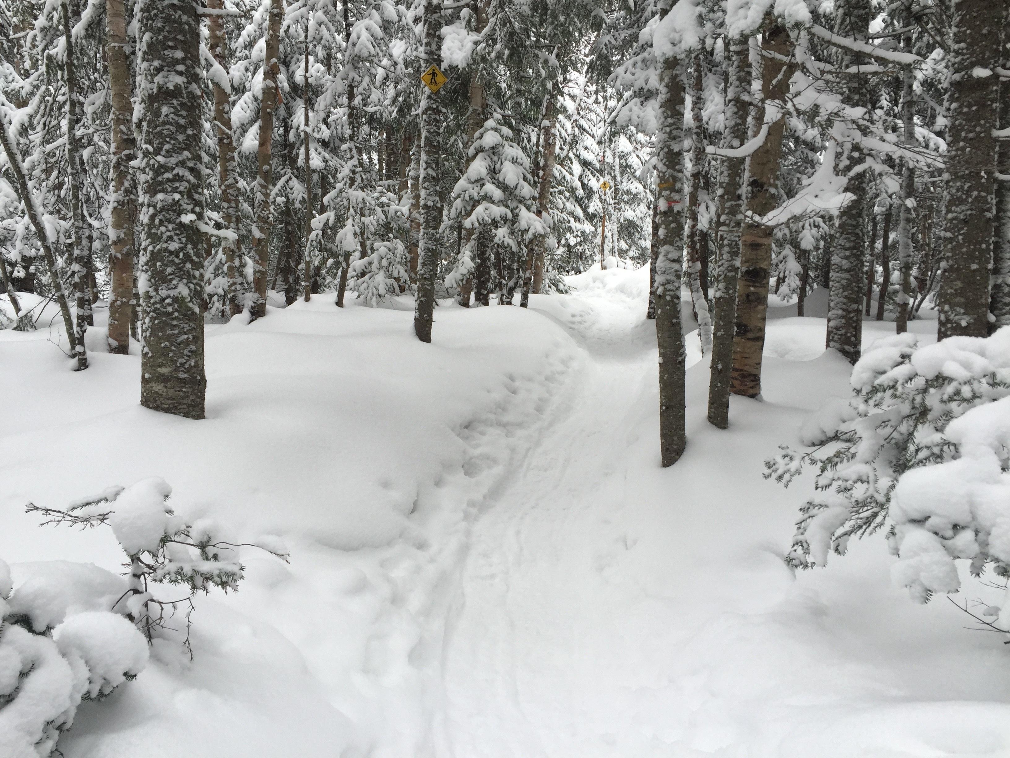 снежная тропинка фото зимние течением