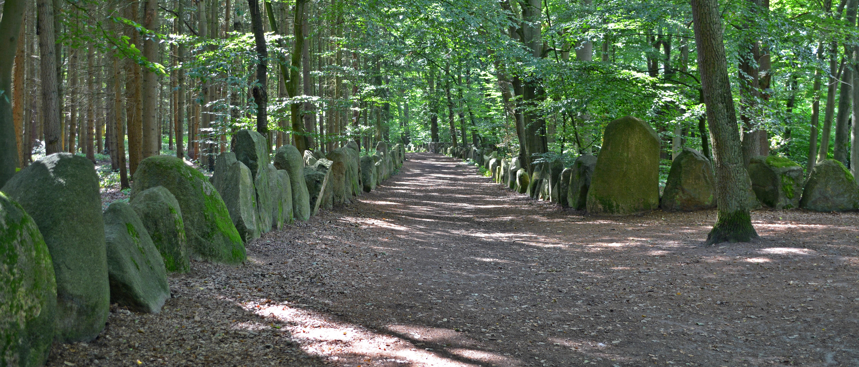 Images gratuites arbre chemin randonn e jungle for Jardin foret