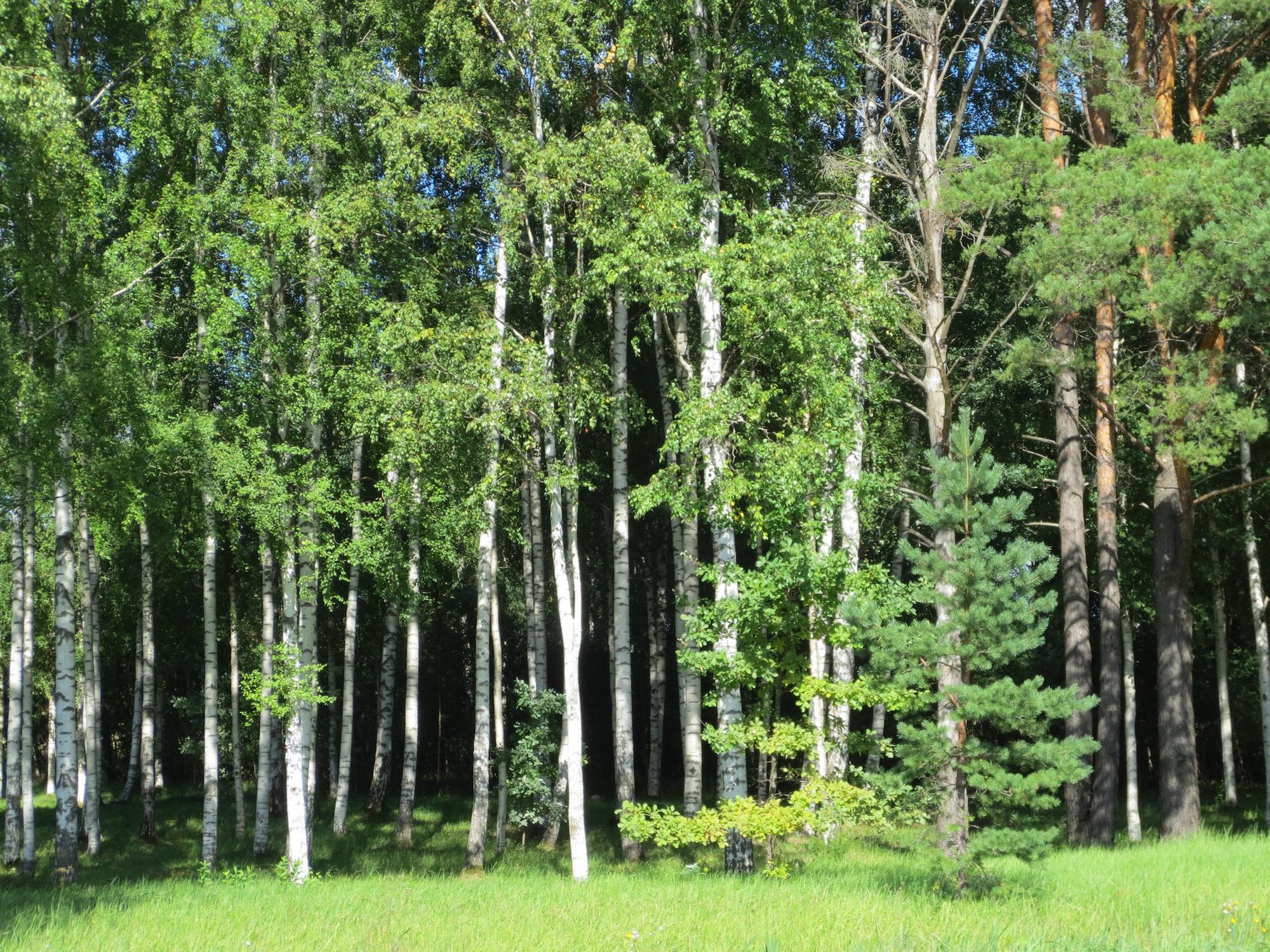 обоям автомат деревья леса нижегородской области фото заброшены
