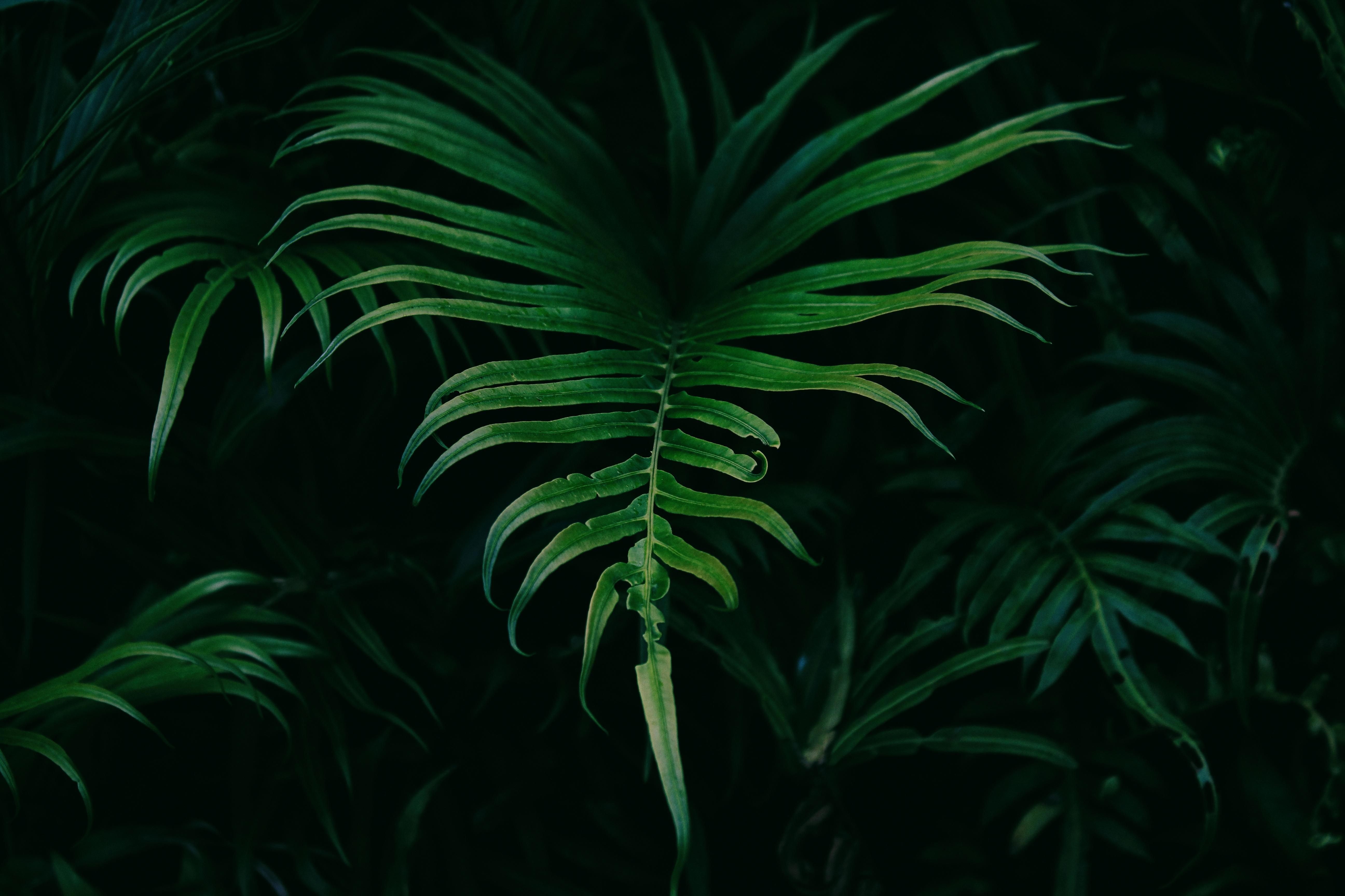 Images gratuites arbre plante feuille fleur for Plante jungle