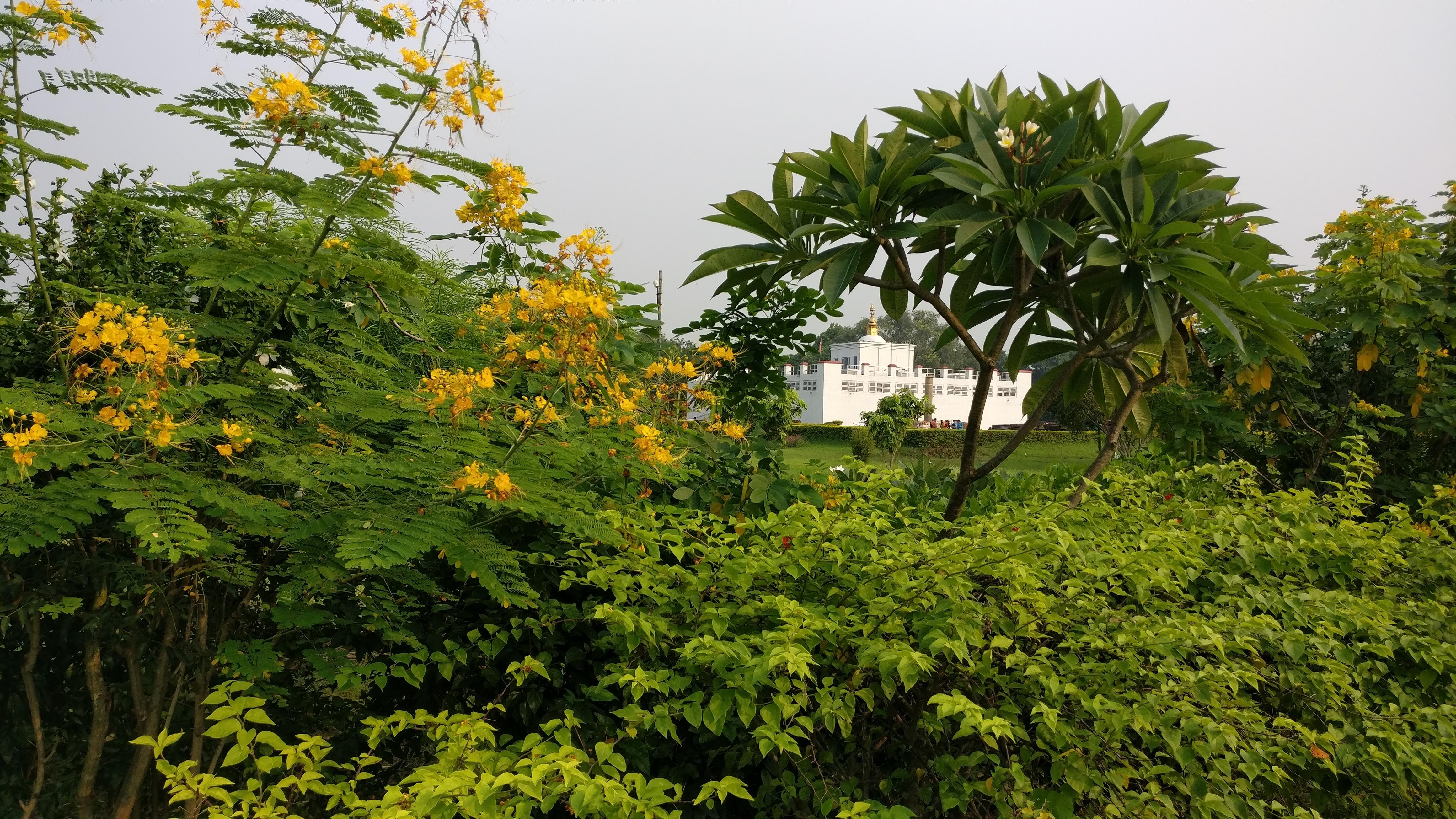 Fotos gratis rbol bosque planta flor selva hojas for Plantas de hojas perennes para jardin