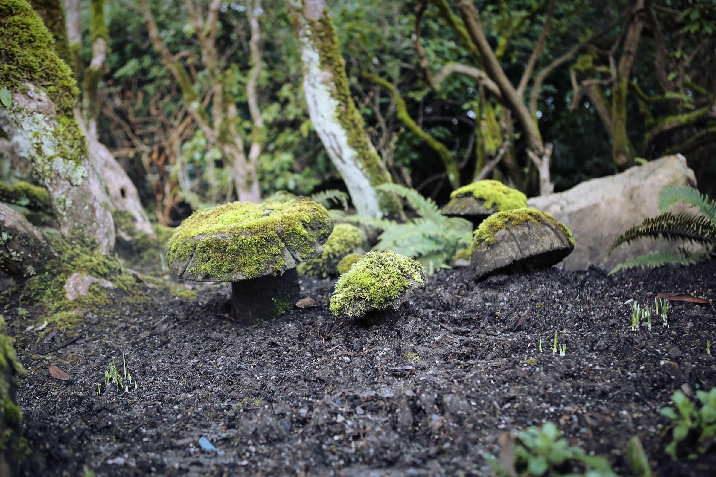 Images gratuites arbre plante feuille fleur mousse for Plante jungle
