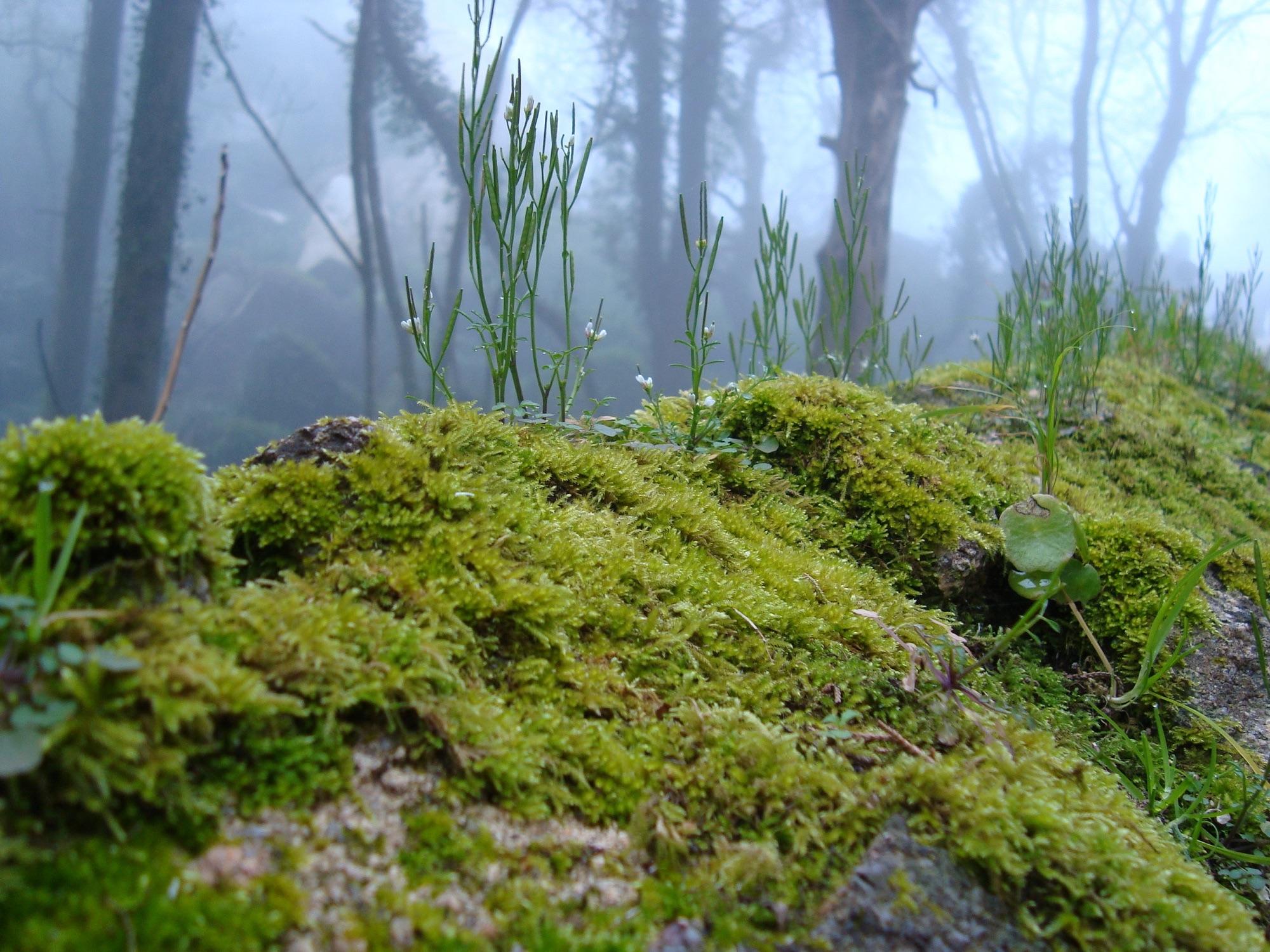 Images gratuites arbre plante mousse vert jungle for Plante jungle