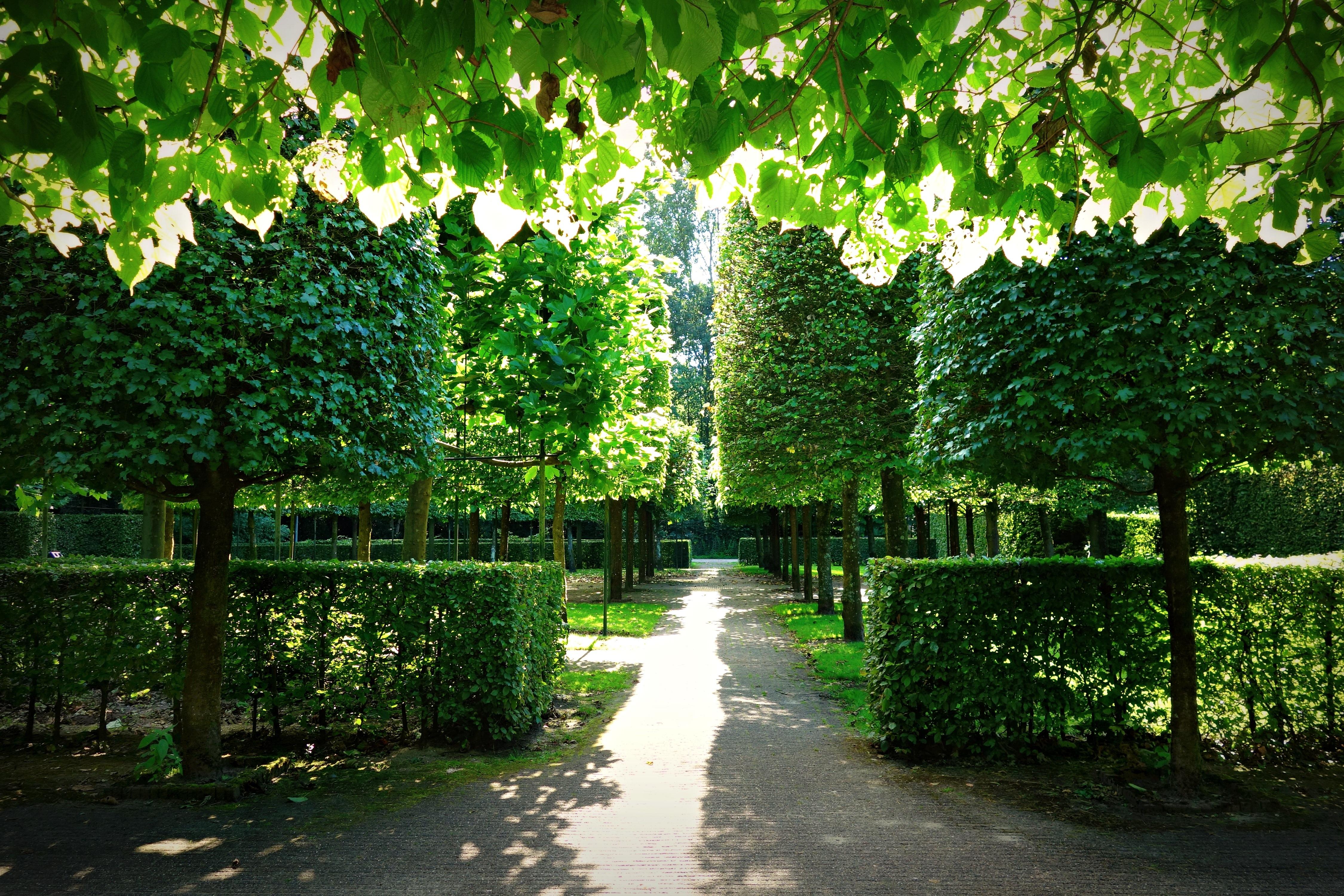 Fotos gratis : árbol, bosque, planta, luz de sol, hoja, flor, verde ...