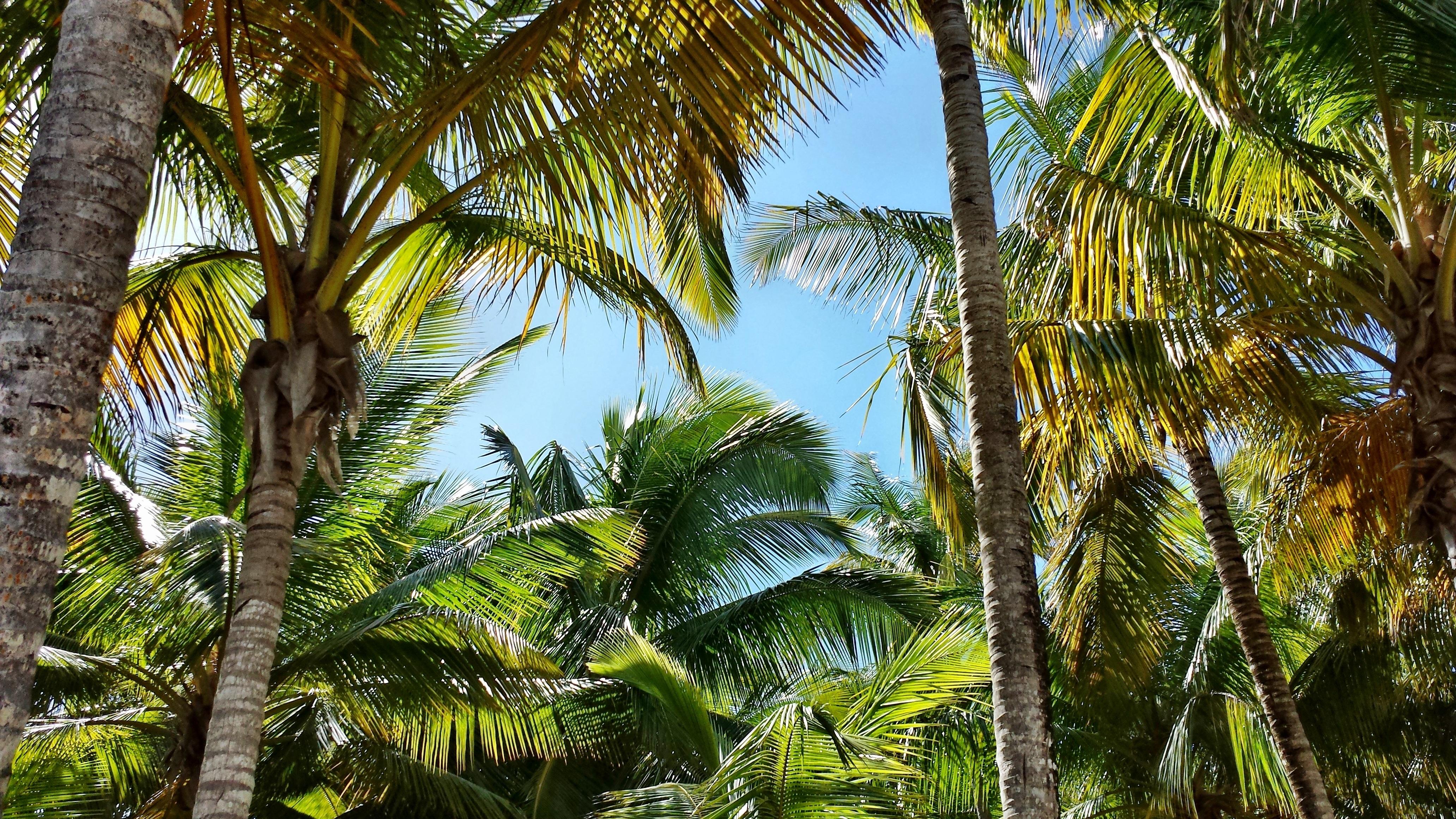 Images gratuites arbre plante lumi re du soleil for Plante jungle