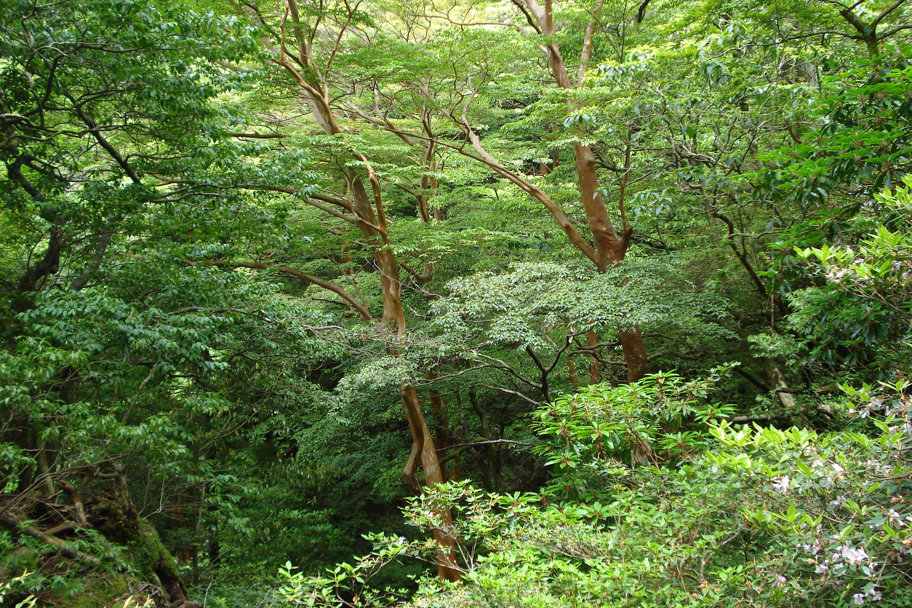 Images gratuites arbre plante piste fleur vert for Plante jungle