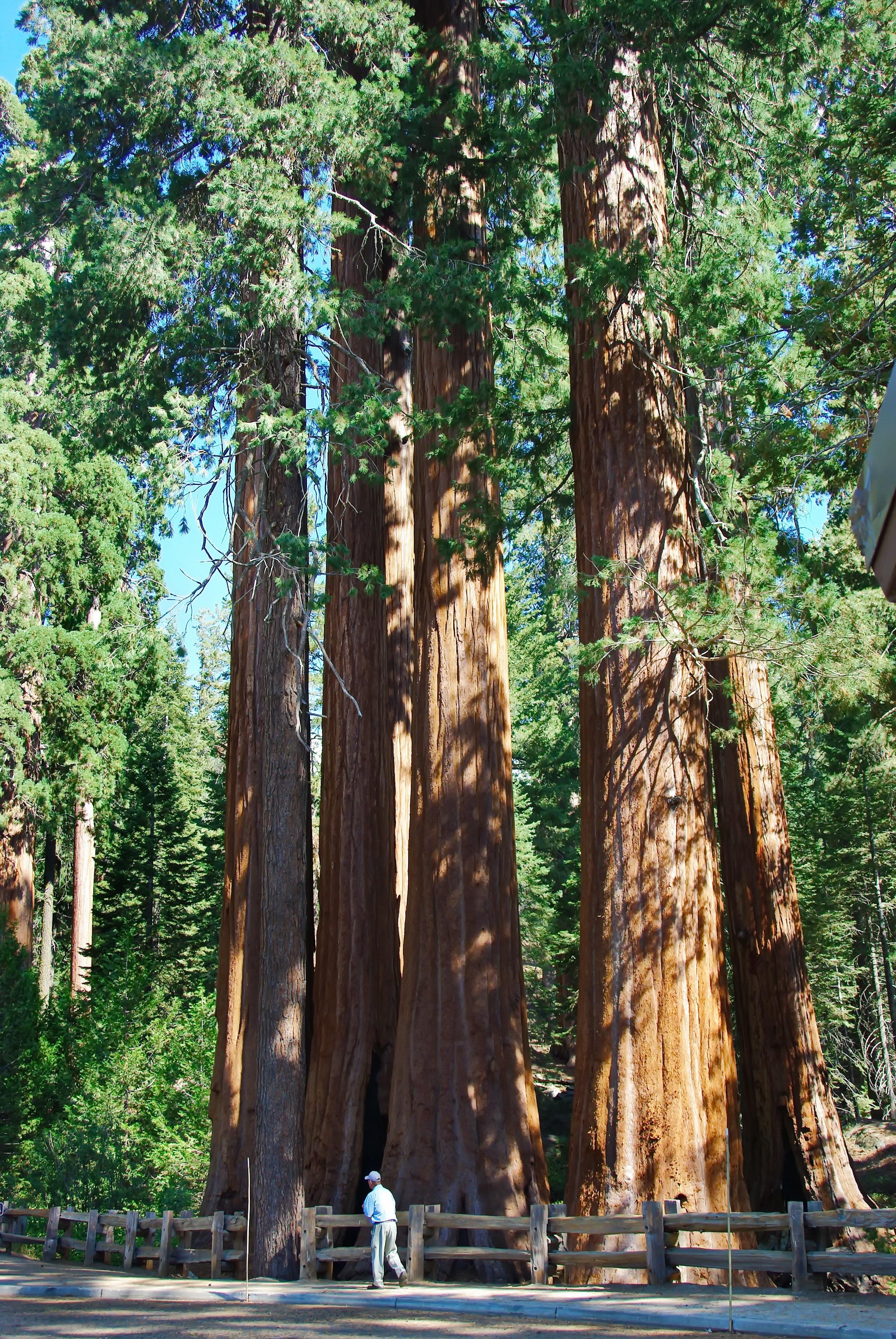 Gambar Pohon Hutan Menanam Bunga Bagasi Rimba Amerika
