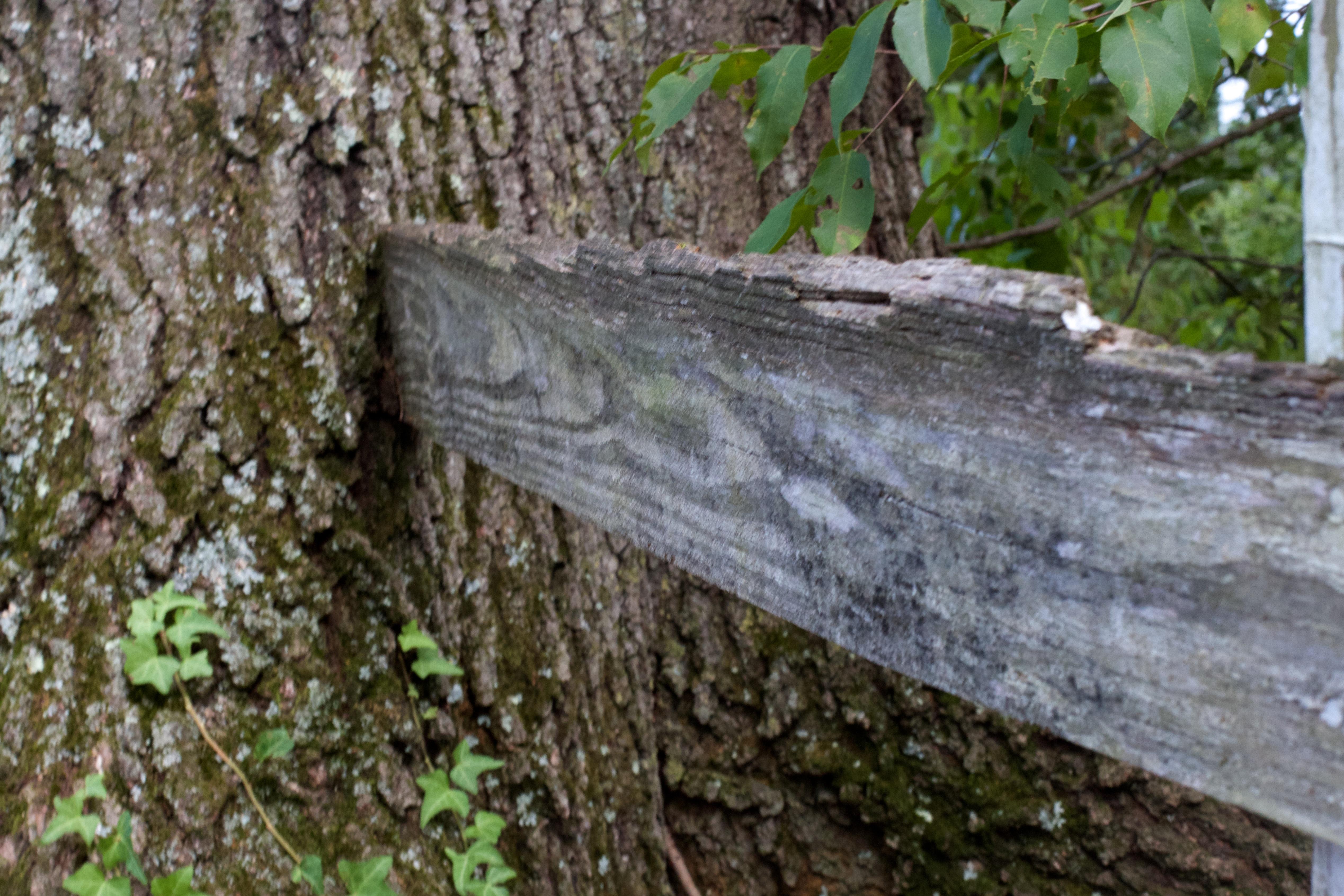Baum Wald Pflanze Holz Kofferraum Insekt Holzige Pflanze