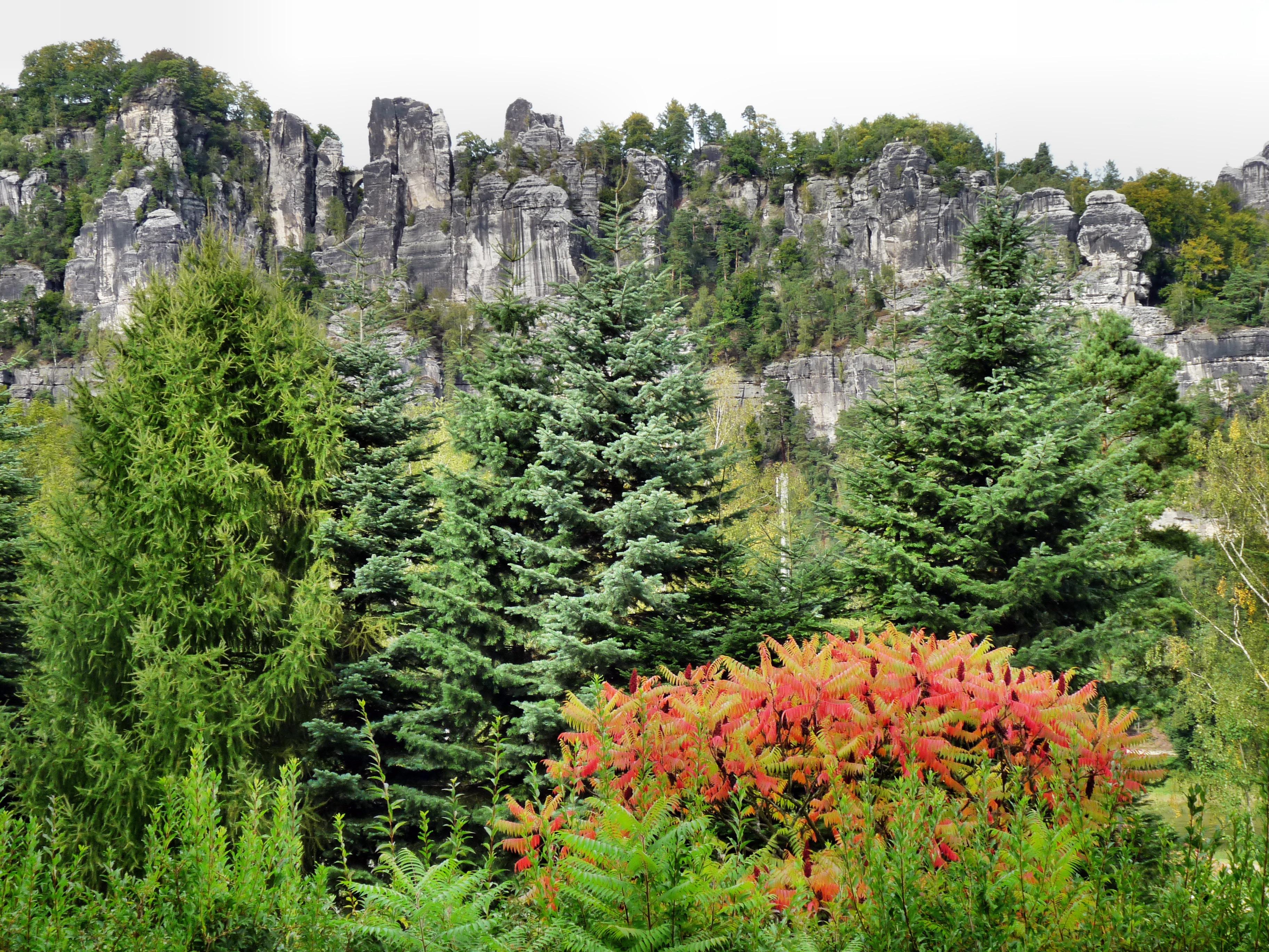 Fotos gratis rbol bosque rock monta a planta prado for Plantas de hojas perennes para jardin