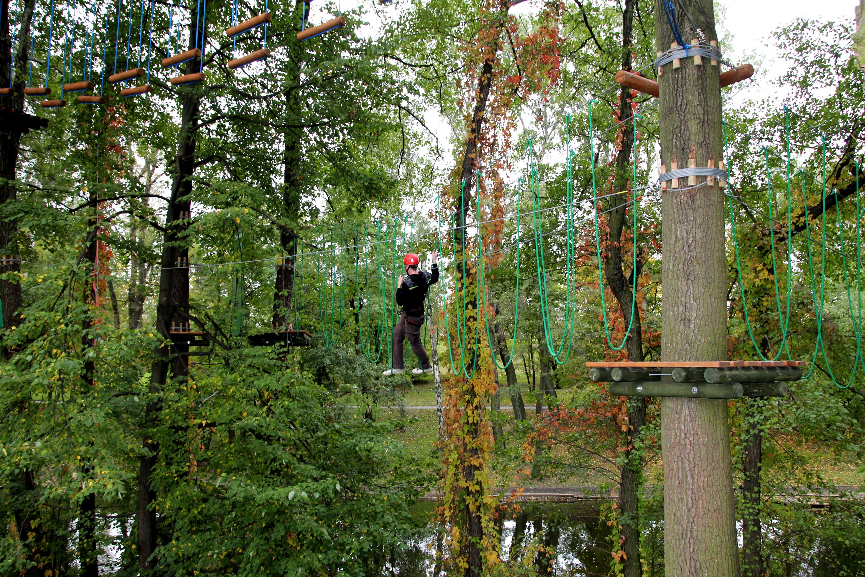 Gratis billeder : træ, Skov, sti, blad, efterår, parkere, klatring ...