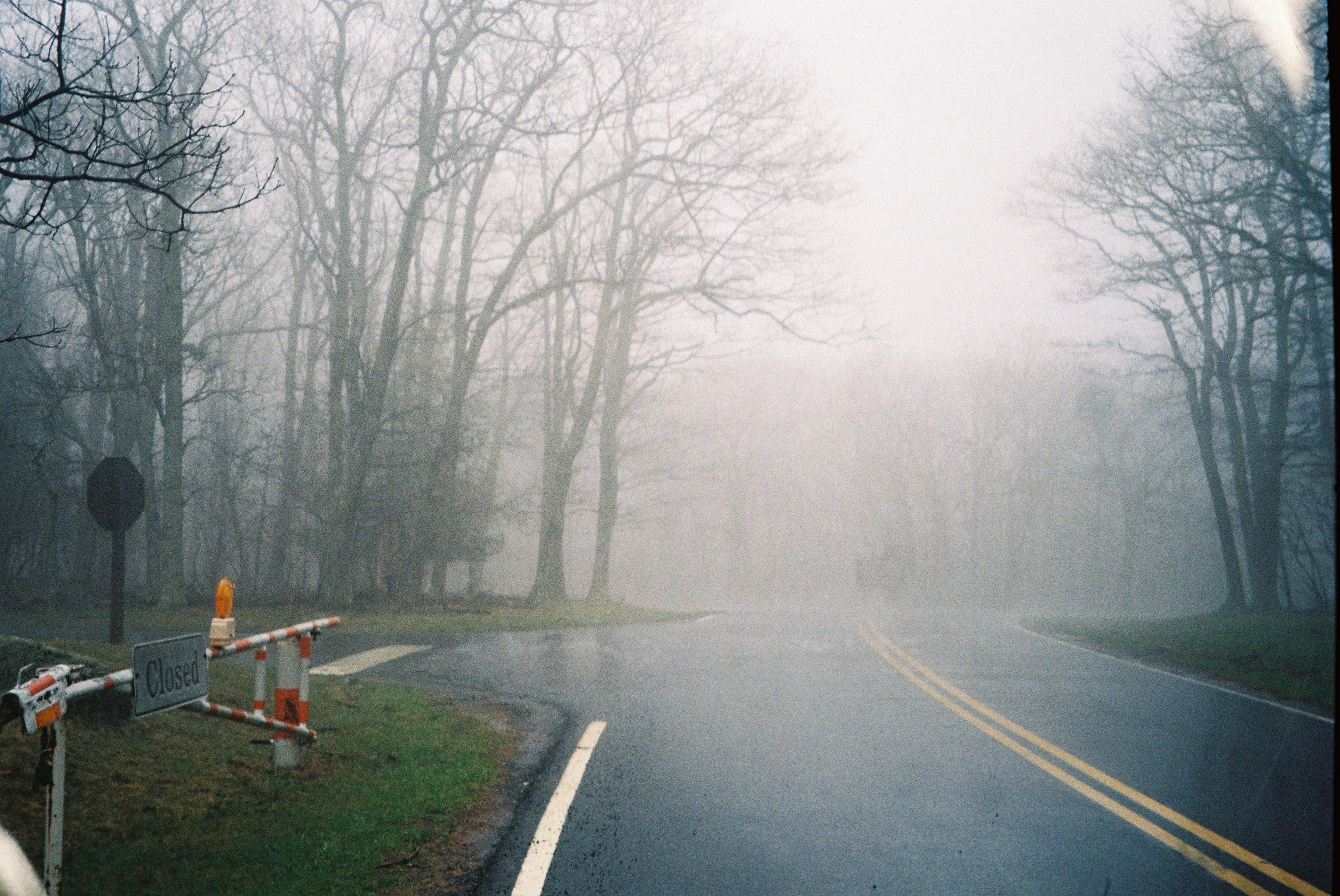 hình ảnh : cây, rừng, tuyết, mùa đông, Sương mù, sương mù, Ánh sáng mặt trời, buổi sáng, sương giá, không khí, Thời tiết, Mùa, đóng băng, Mưa phùn, ...
