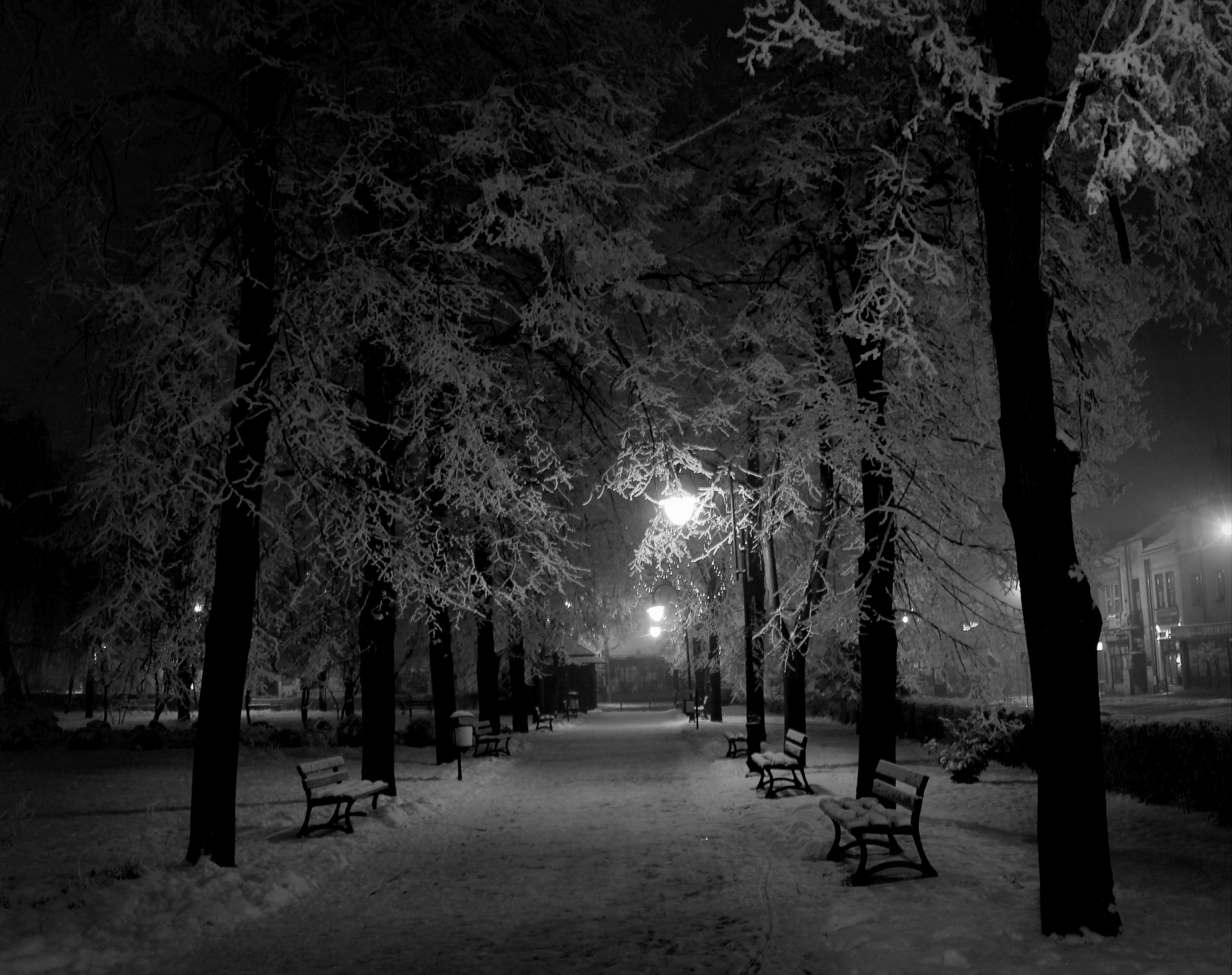 Images Gratuites Arbre Forêt Neige Hiver Noir Et Blanc